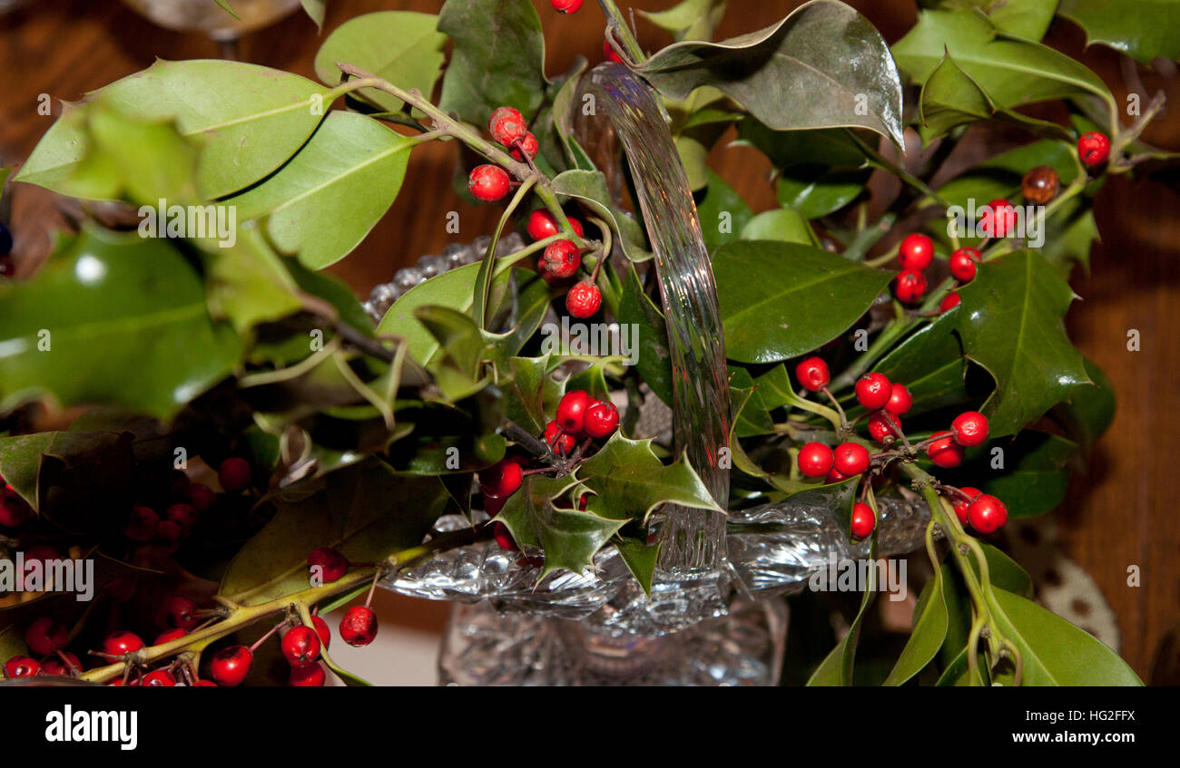 Decorative sprigs of Christmas holly with red berries in a glass basket vase. St Paul Minnesota MN USA - Stock Image