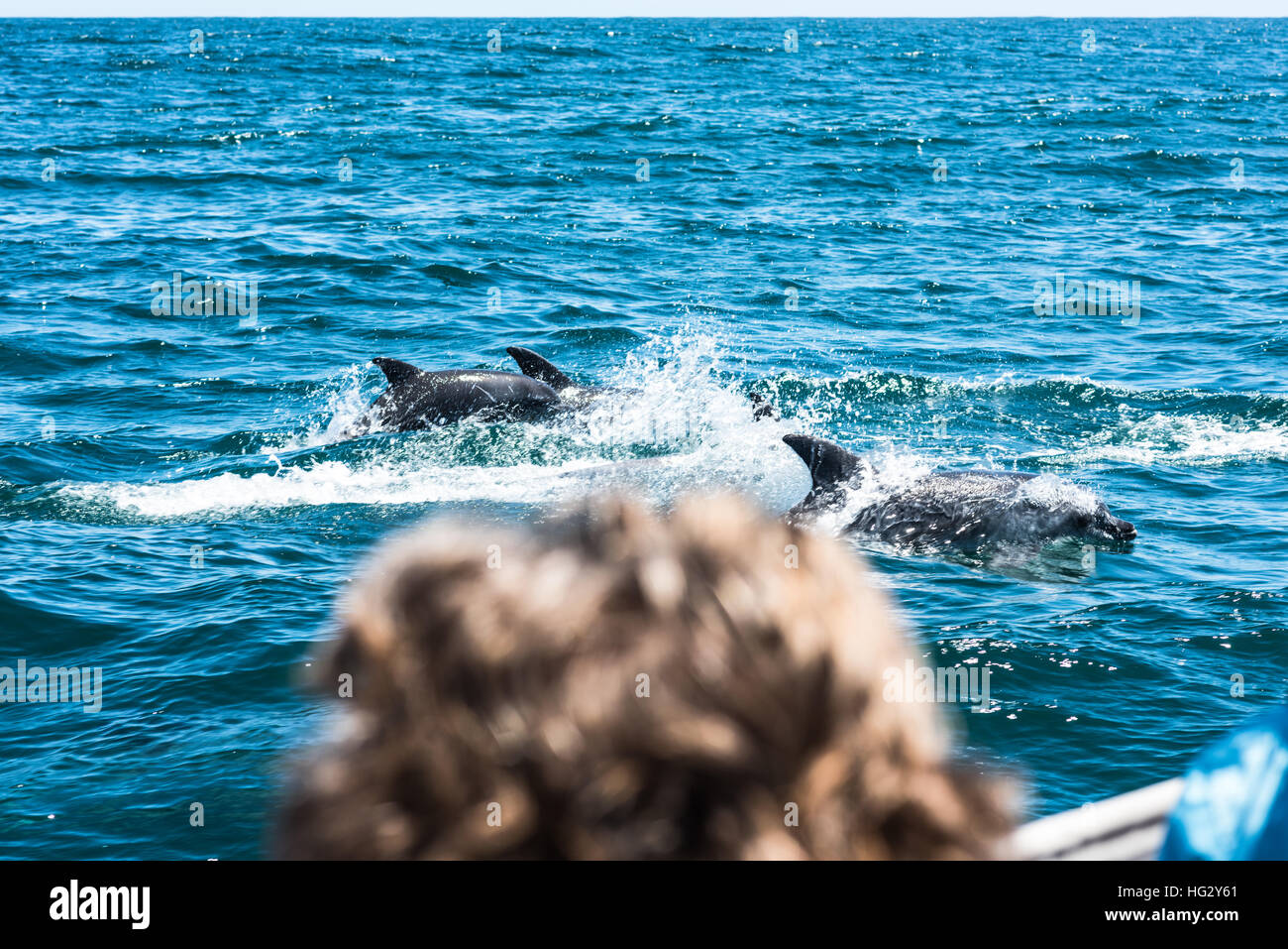 Dolphin family playing in the water - Stock Image