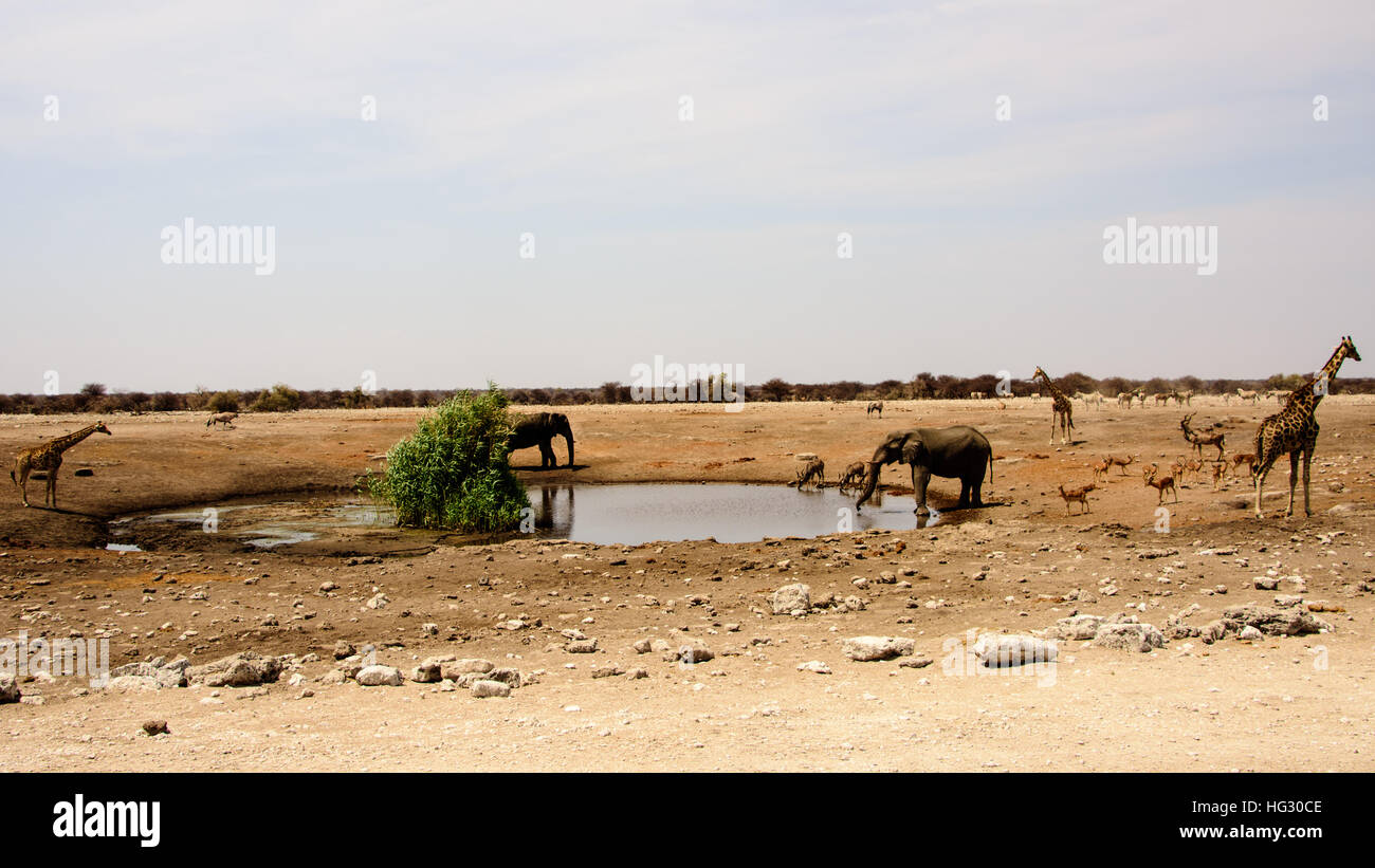 African safari landscape - Stock Image