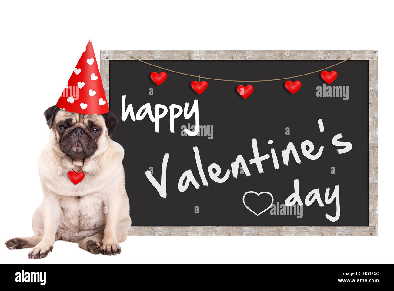 grumpy cute pug puppy dog wearing party hat with hearts, sitting next to blackboard sign with text happy valentine's - Stock Image