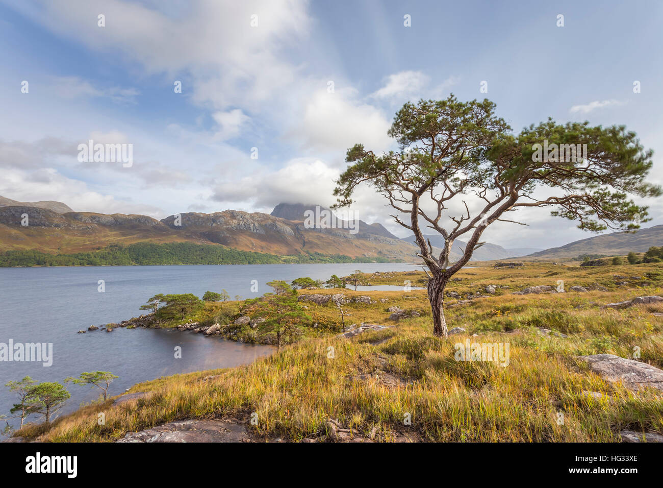 Lone Scots Pine on the shores of Loch Maree, looking over to Slioch - Stock Image