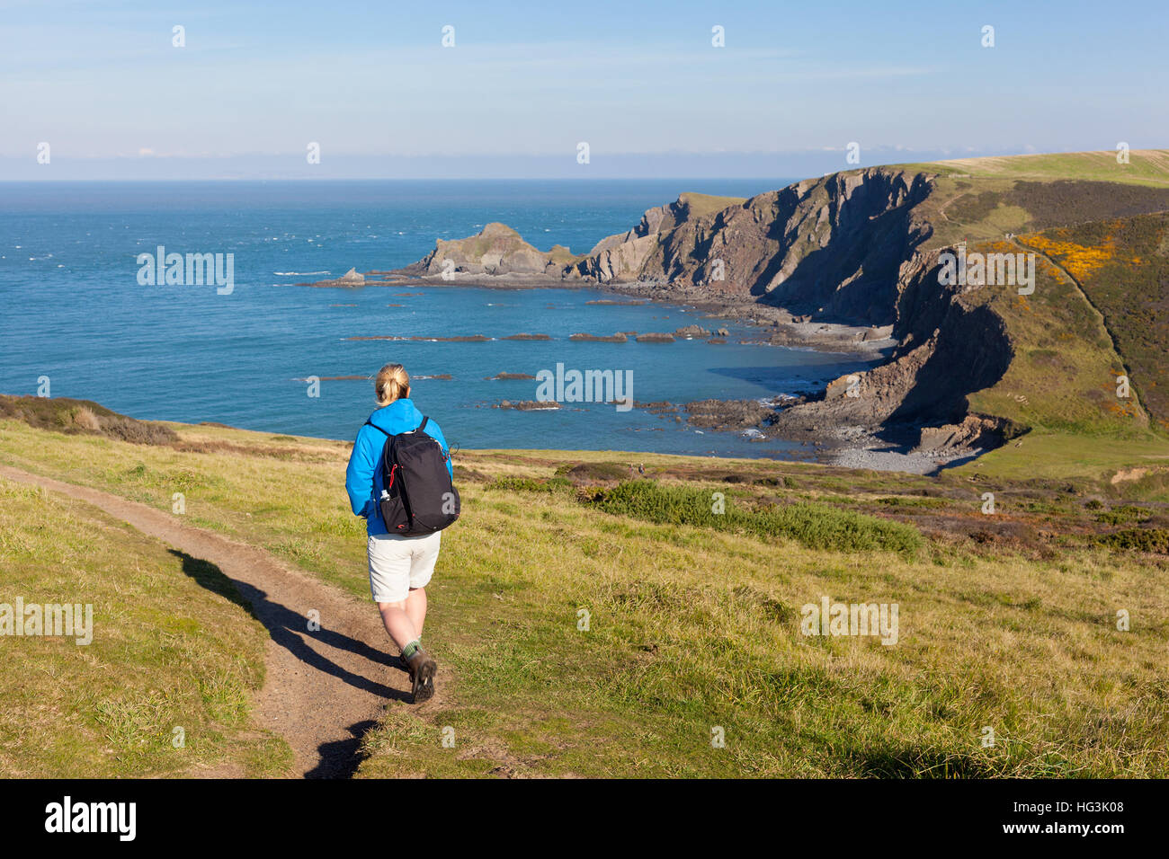A woman walking a cliff-top coastal path near Hartland Quay in North Devon, England, UK. Selective focus on the - Stock Image