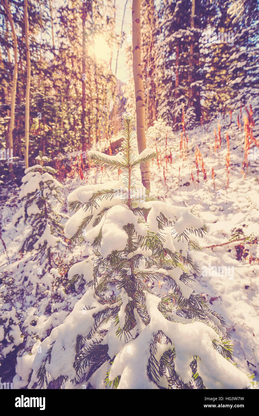 Vintage toned picture of a winter forest against sun. - Stock Image