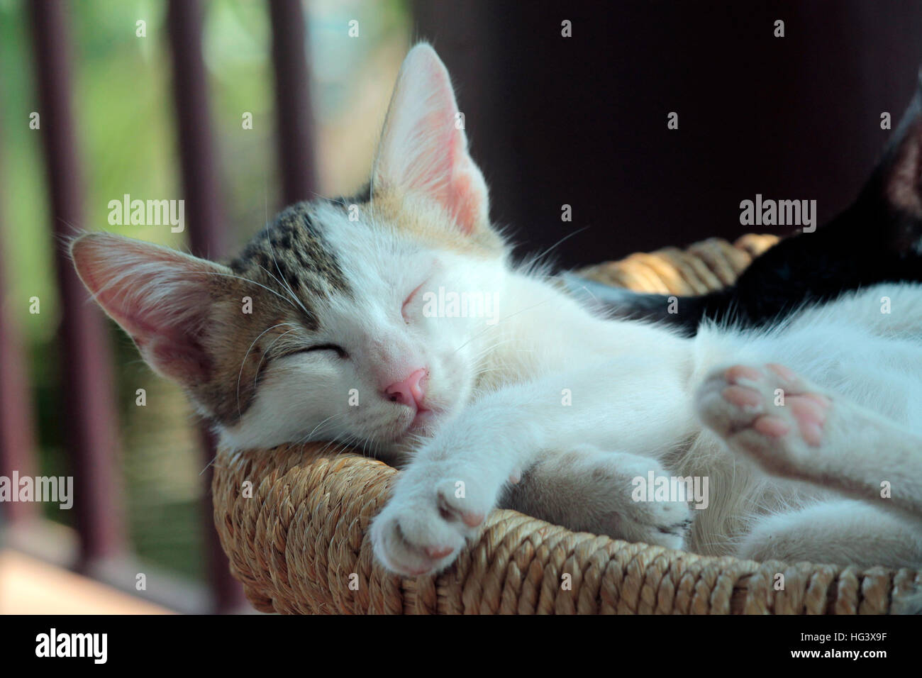 Sleeping Beauty - Stock Image