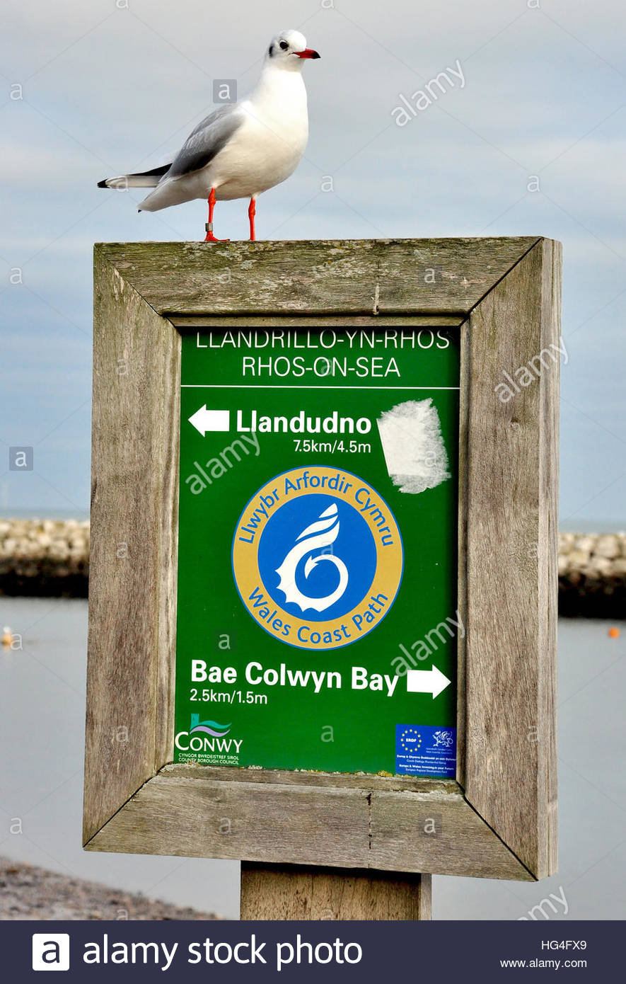 A gull resting on a signpost at Rhos on Sea, Colwyn Bay in Wales. Stock Photo