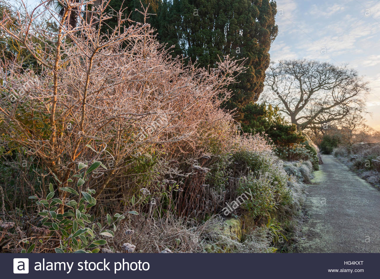 perennials trees shrubs winter frost Paradise Walk - Stock Image