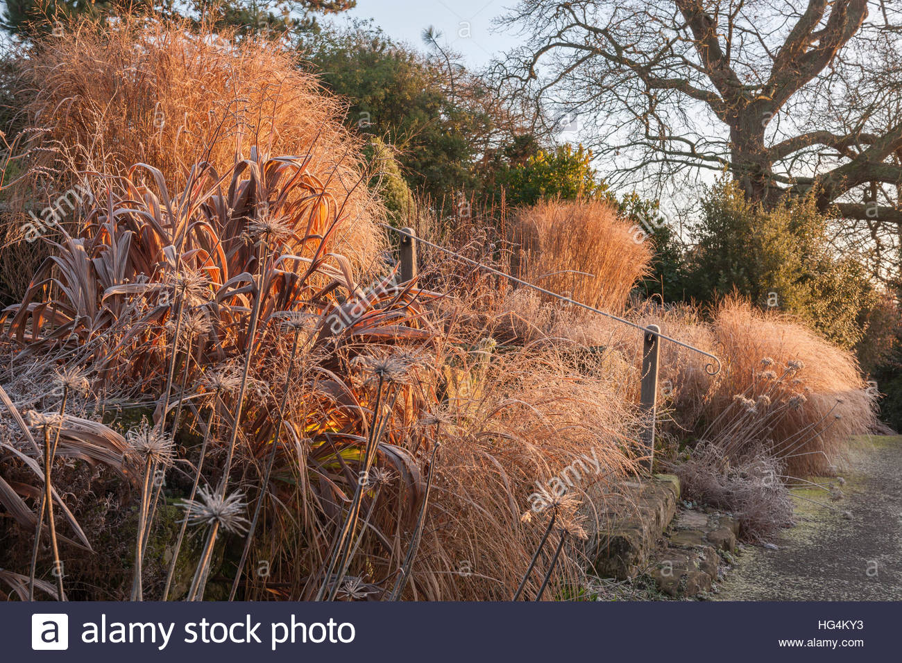 perennials trees shrubs winter frost - Stock Image