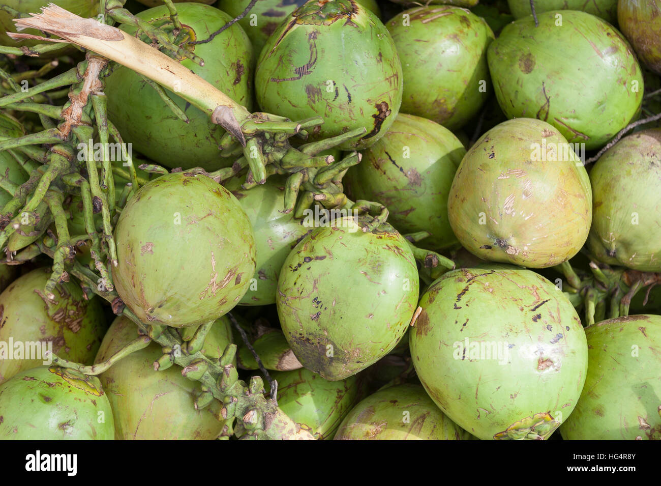 Pile of fresh green coco verde drinking coconuts - Stock Image