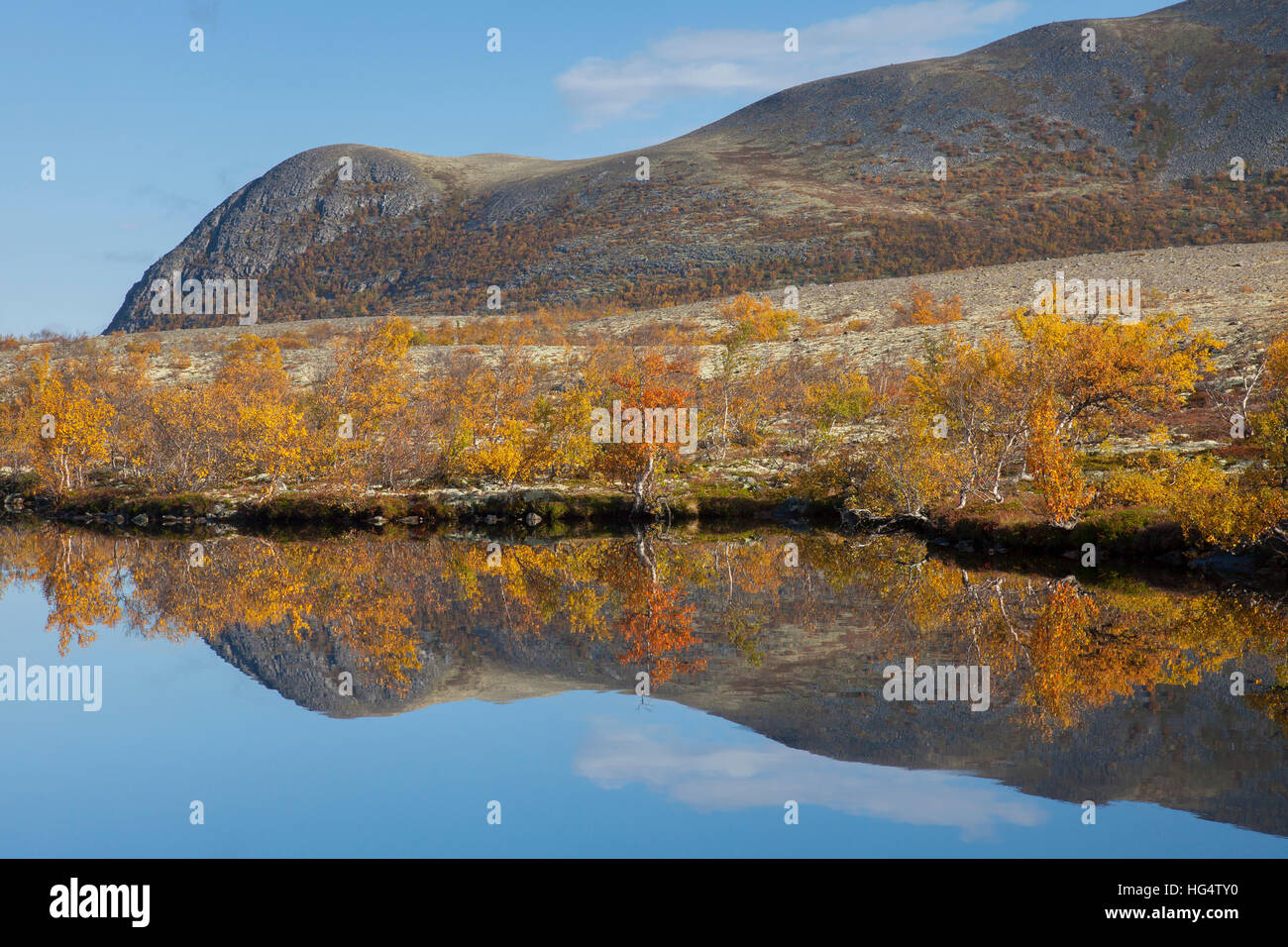 Birch trees showing autumn colours reflected in water of lake, Døråldalen in Rondane National Park, Oppland, - Stock Image
