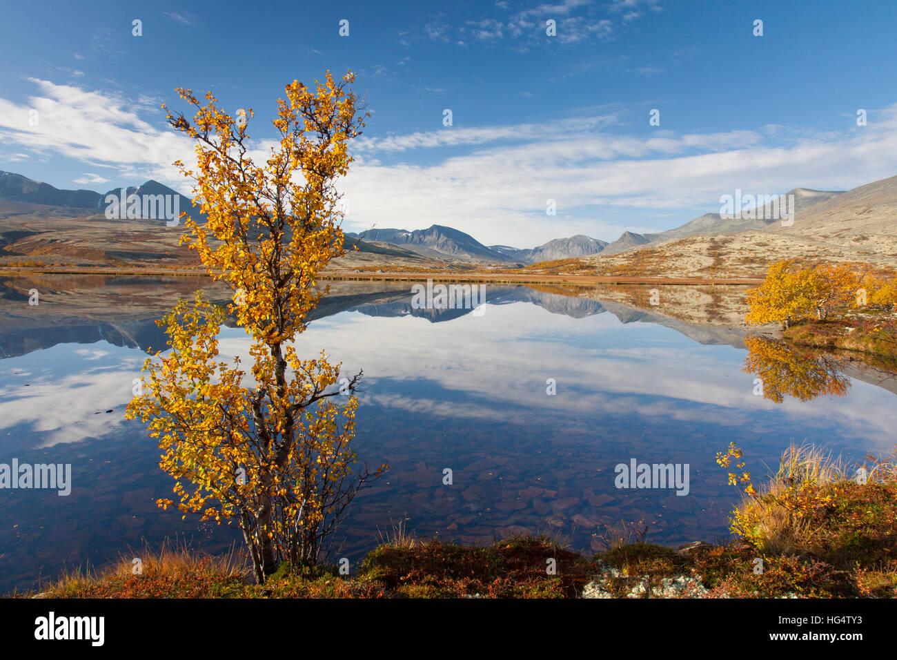 Birch trees showing autumn colours along lake, Døråldalen in Rondane National Park, Oppland, Norway - Stock Image