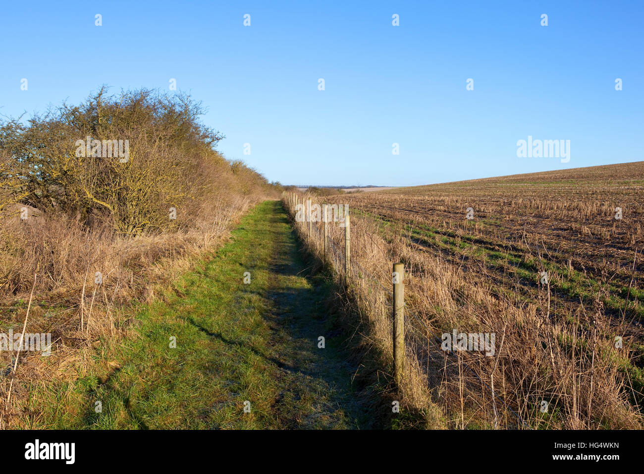 A grassy bridleway with a hawthorn hedgerow and wire fence in a Yorkshire wolds landscape under a clear blue sky - Stock Image