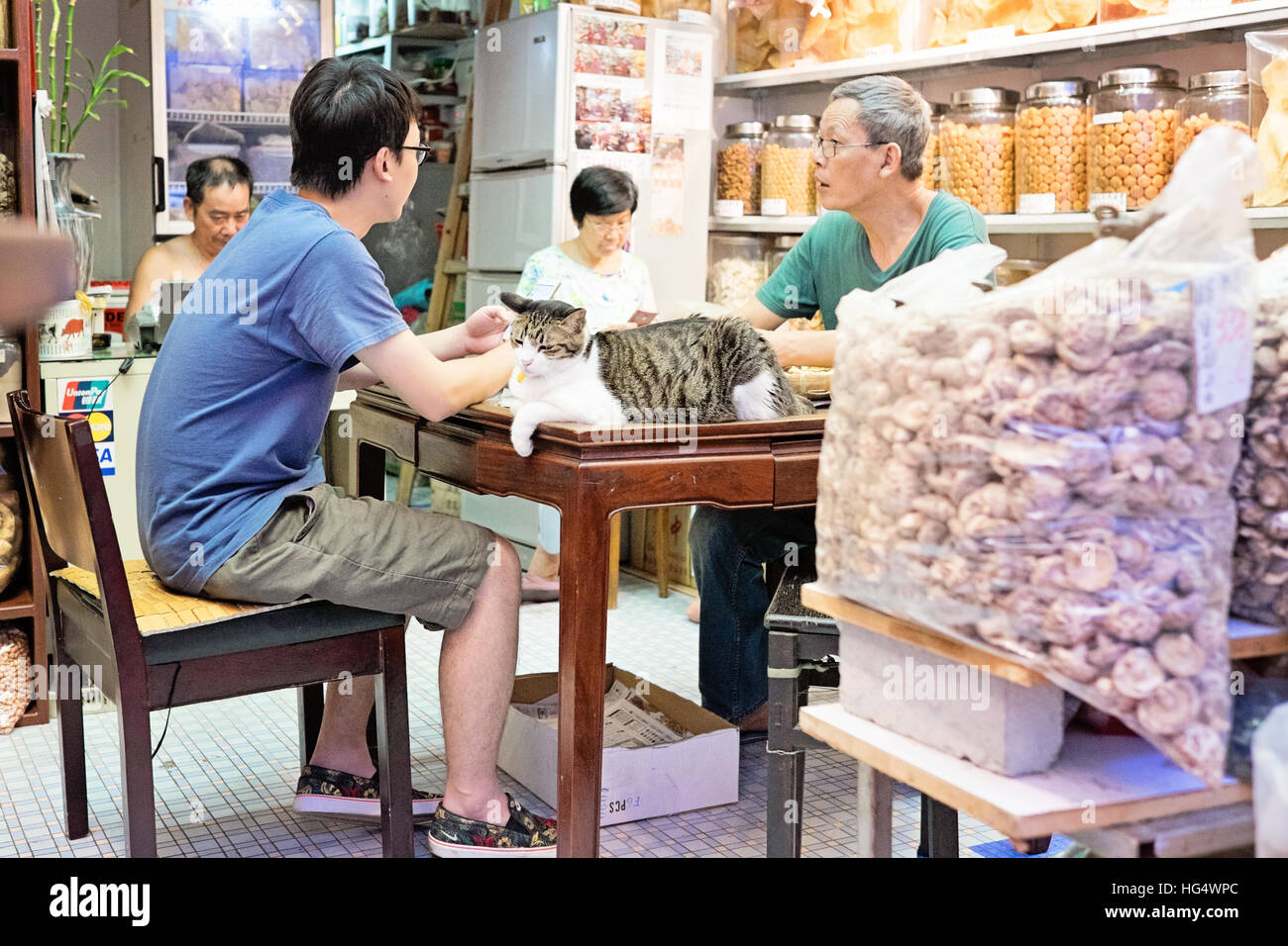 Cat sitting on table a Hong Kong dried seafood store - Stock Image