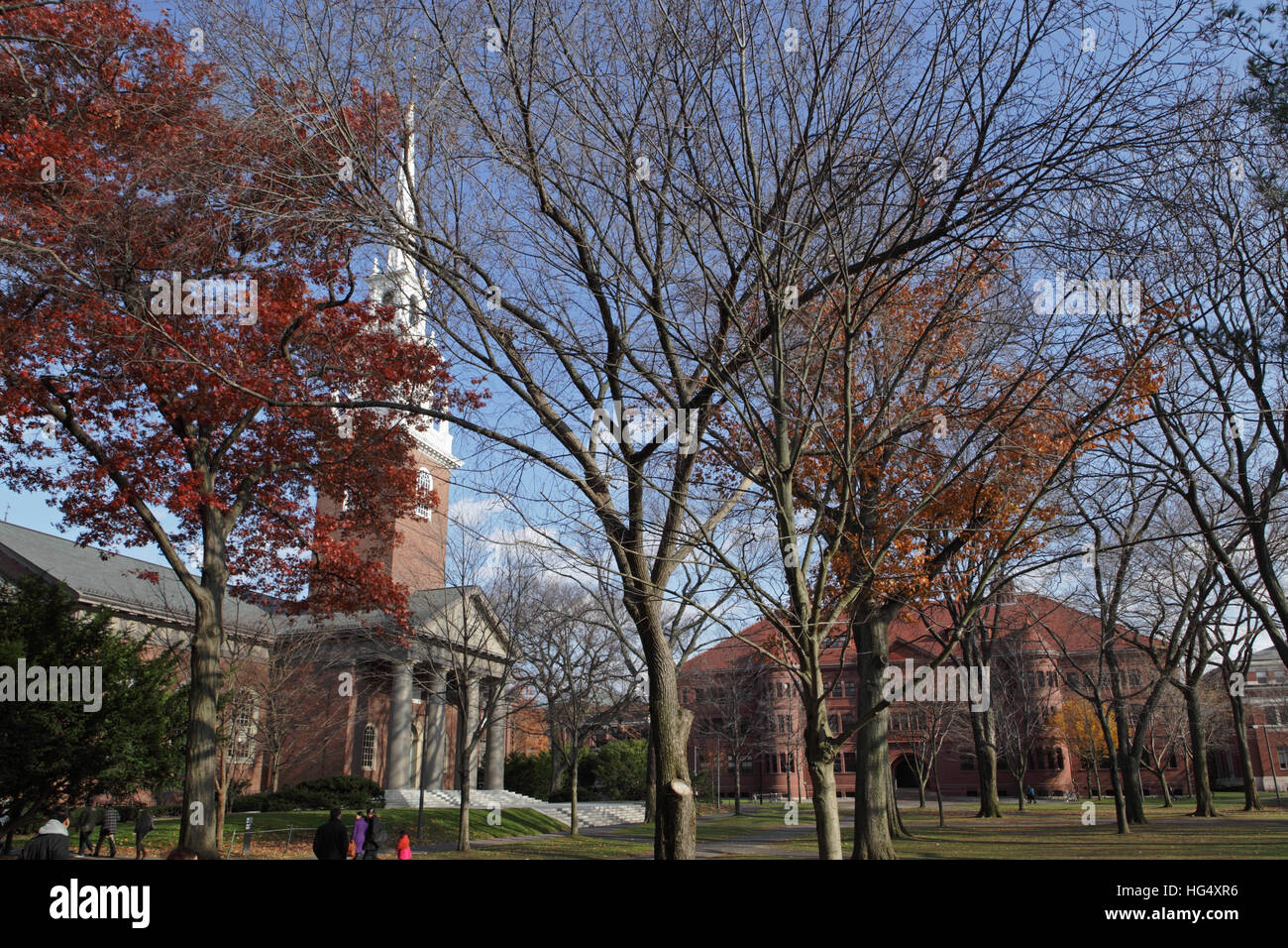 Harvard University campus on an autumn morning. The Memorial Church spire appears on the left and Sever Hall in - Stock Image