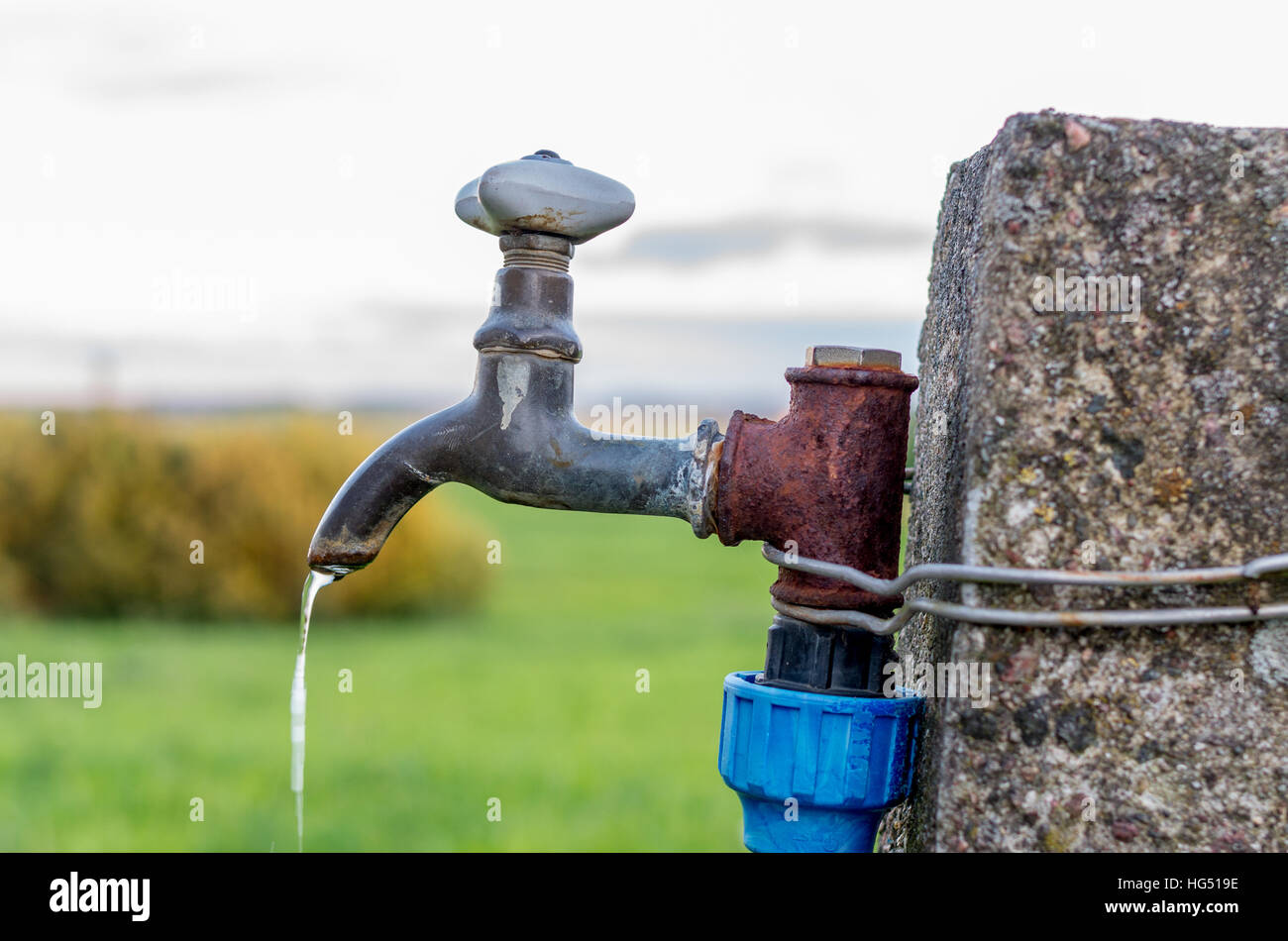 A old rusty water tap in garden Stock Photo: 130417882 - Alamy
