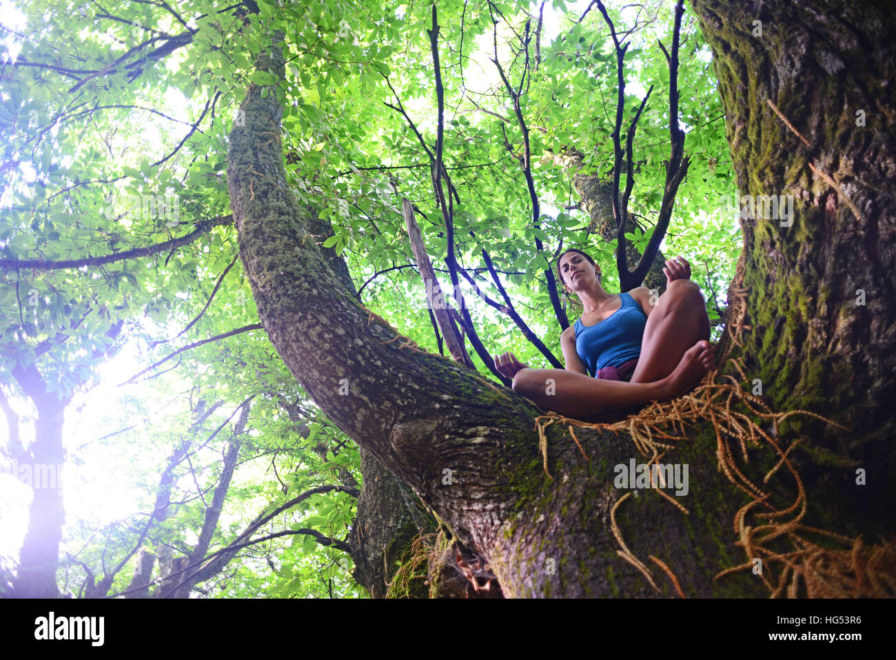 Young woman meditates on big chestnut tree. - Stock Image
