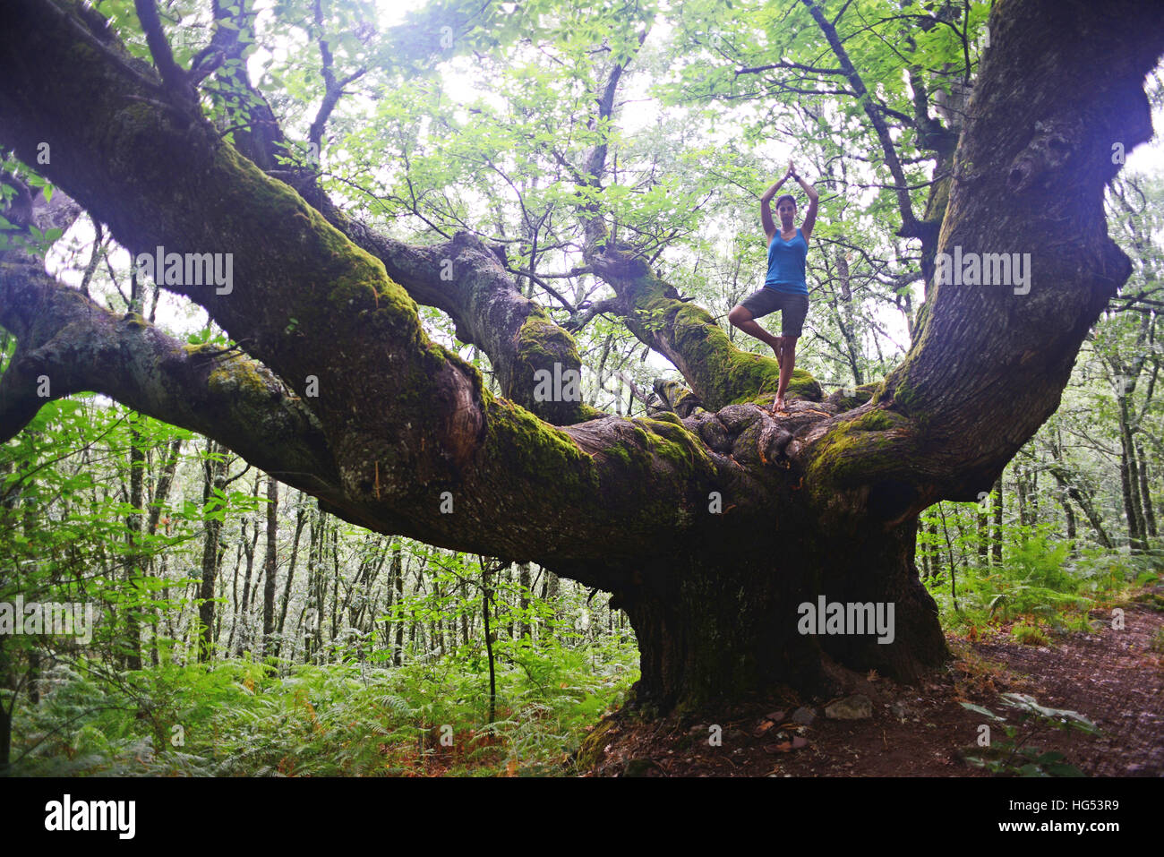 Young woman in tree pose on big chestnut tree. - Stock Image
