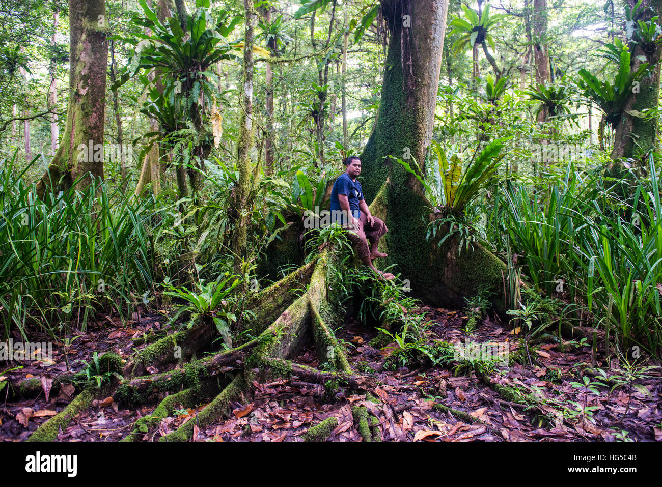 Man sitting in the Yela Ka forest conservation area of Ka trees in the Yela Valley, Kosrae, Federated States of - Stock Image