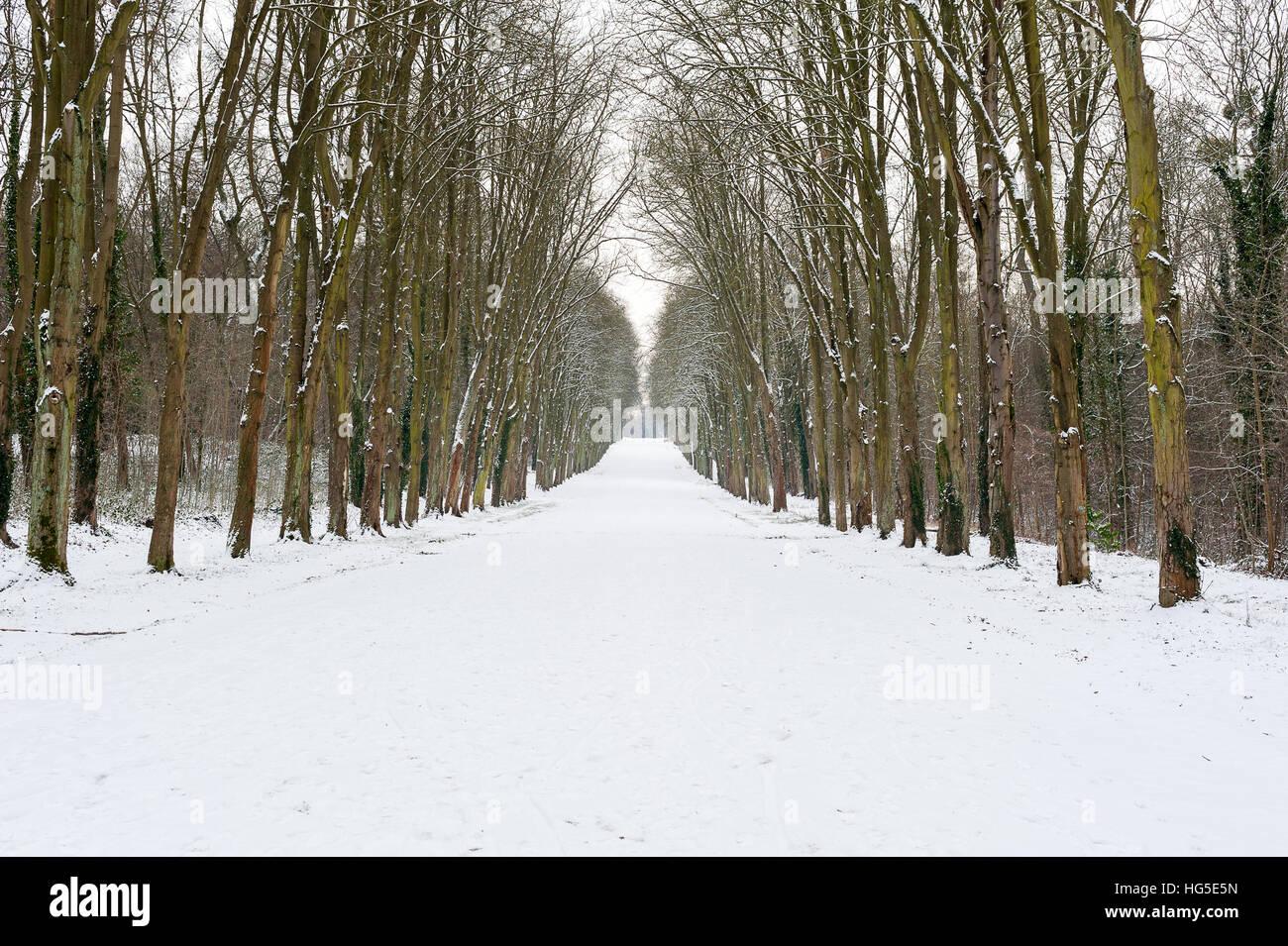 Empty road under the snow with tree alignment, Parc de Saint-Cloud, Paris, France - Stock Image