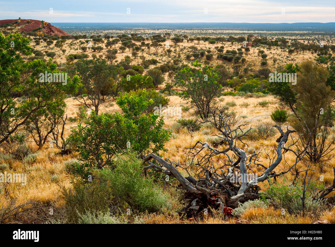 Australian desert (outback) in Northern Territory - Stock Image