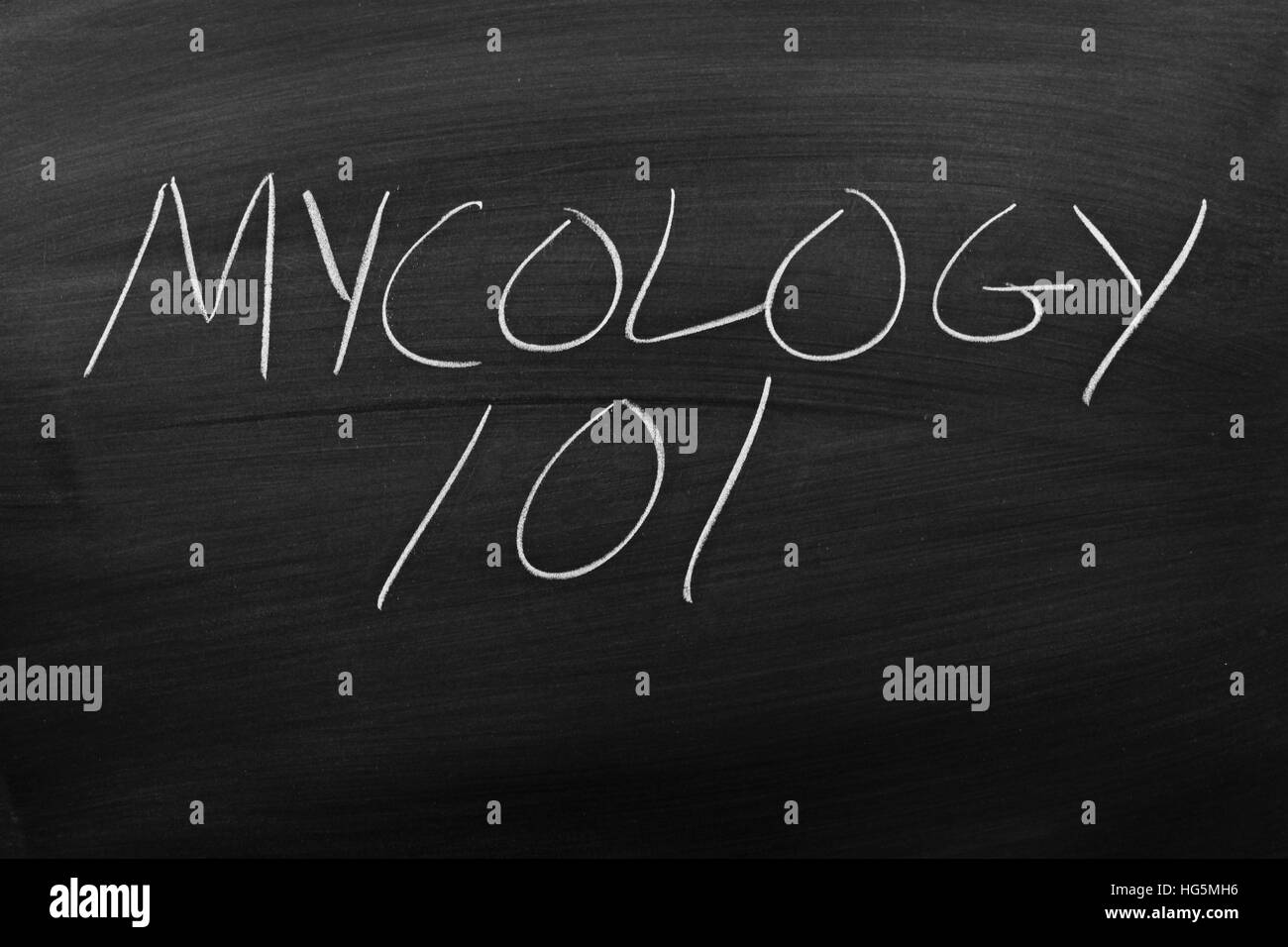 The words 'Mycology 101' on a blackboard in chalk - Stock Image