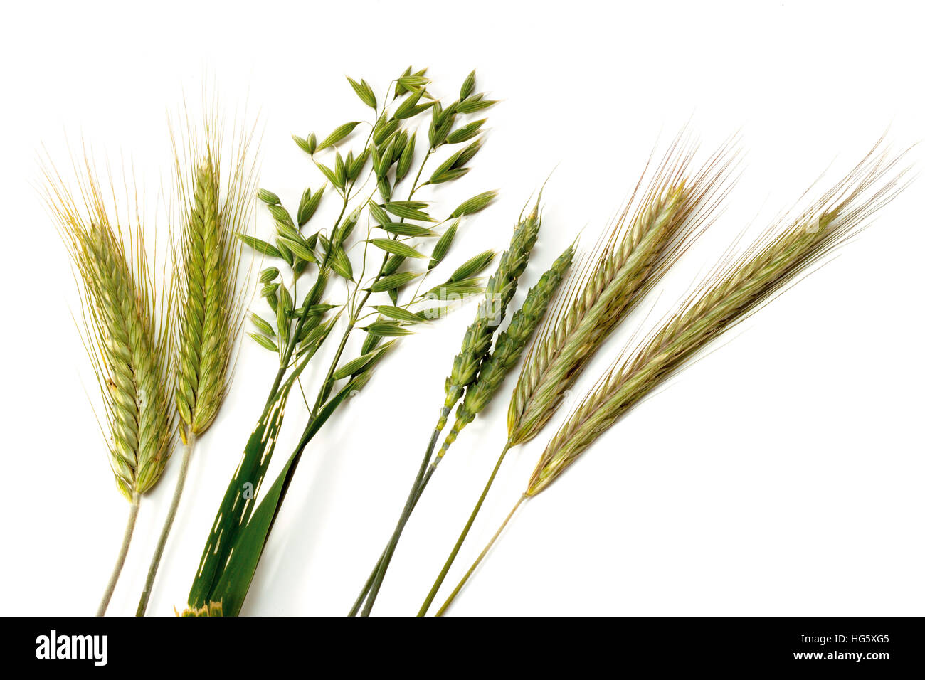 Wheat And Grain Free Foods To Buy