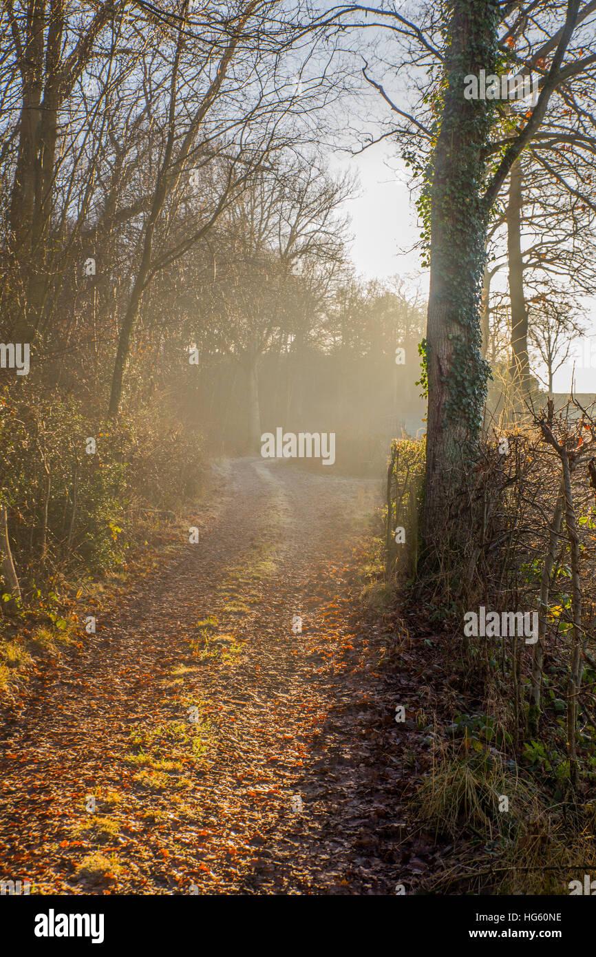 Pathway on the Ashdown Forest near Pooh Sticks bridge. - Stock Image