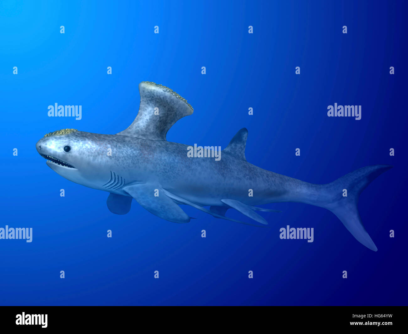 Akmonistion is an extinct shark from the Early Carboniferous period. - Stock Image
