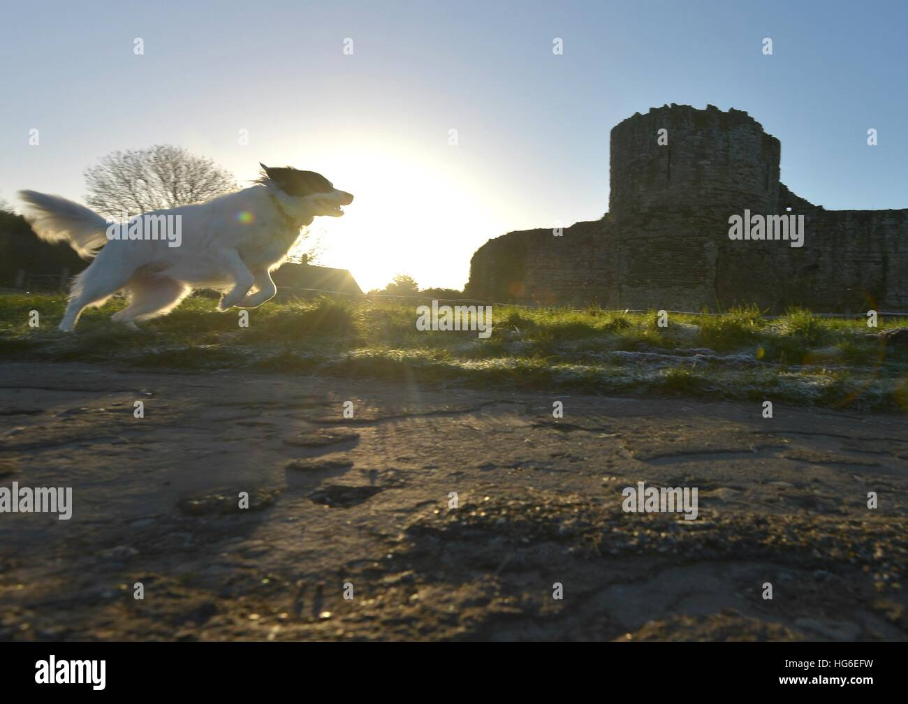 Dog walking past Pevensey Castle, East Sussex - Stock Image