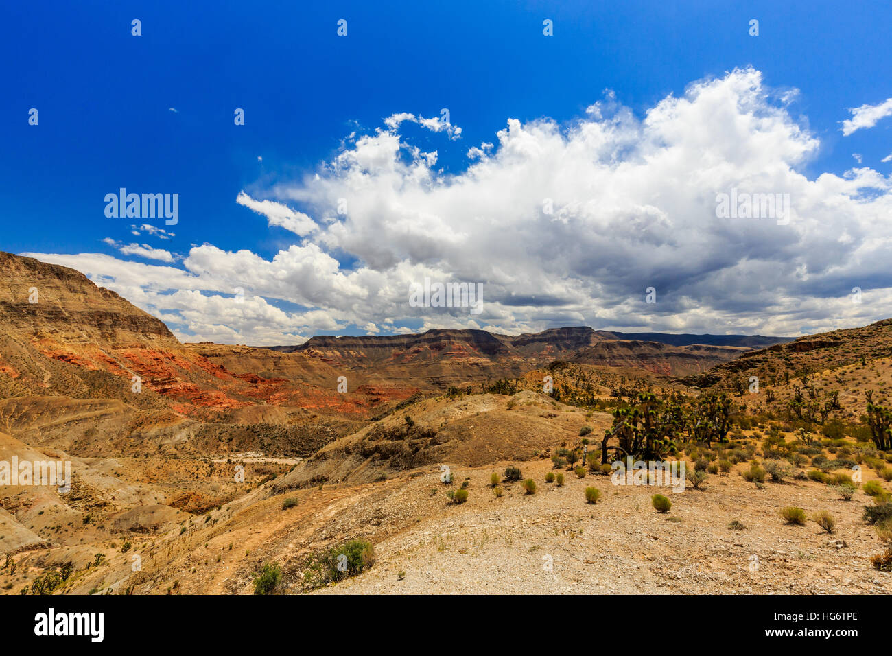 Landscape with Joshua Trees at Joshua Tree Road in the Mojave Desert near Scenic Backway. - Stock Image