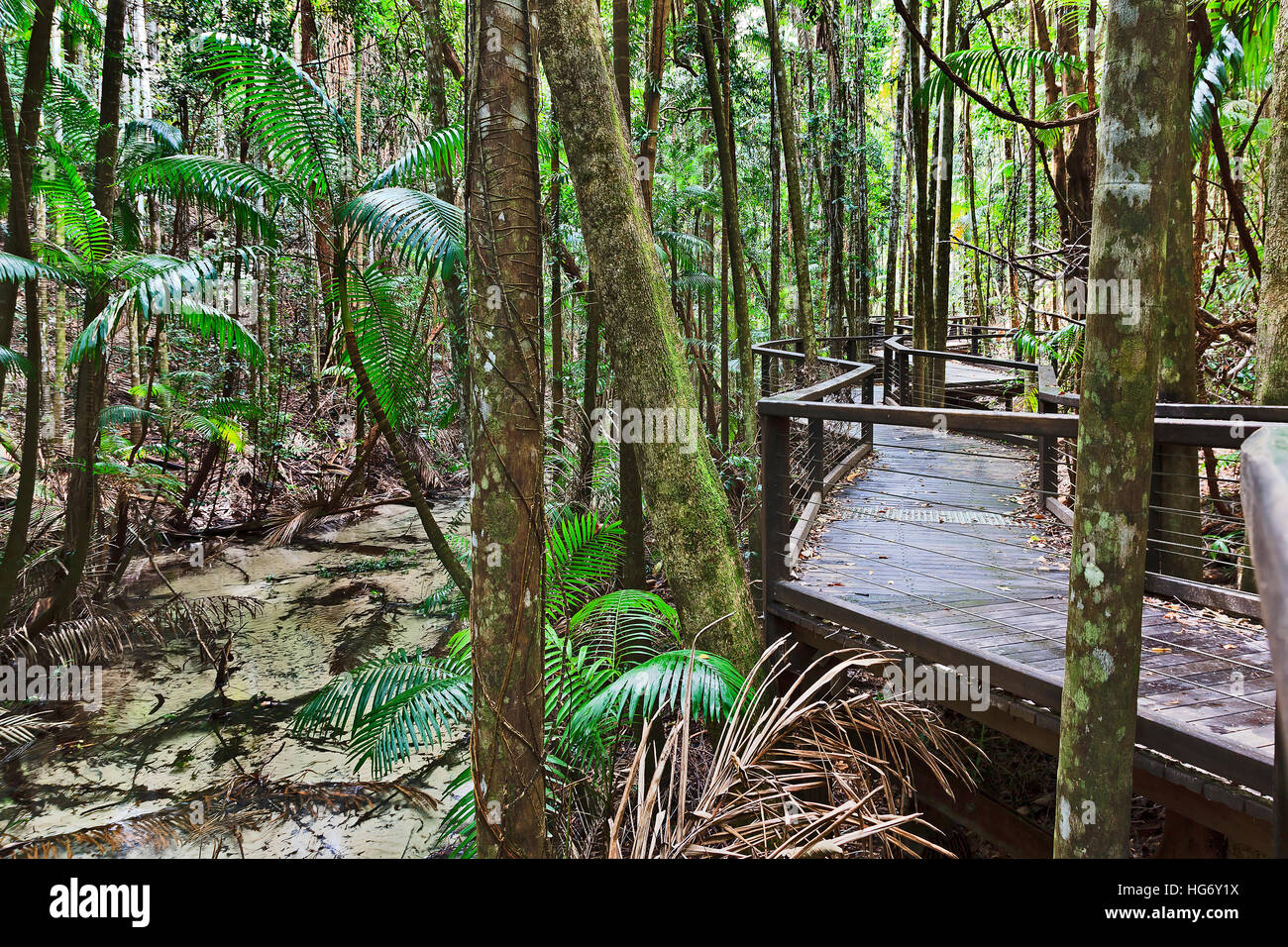 Fraser island rain-forest around Central station along shallow freshwater flowing creek. Timber boardwalk for tourists - Stock Image