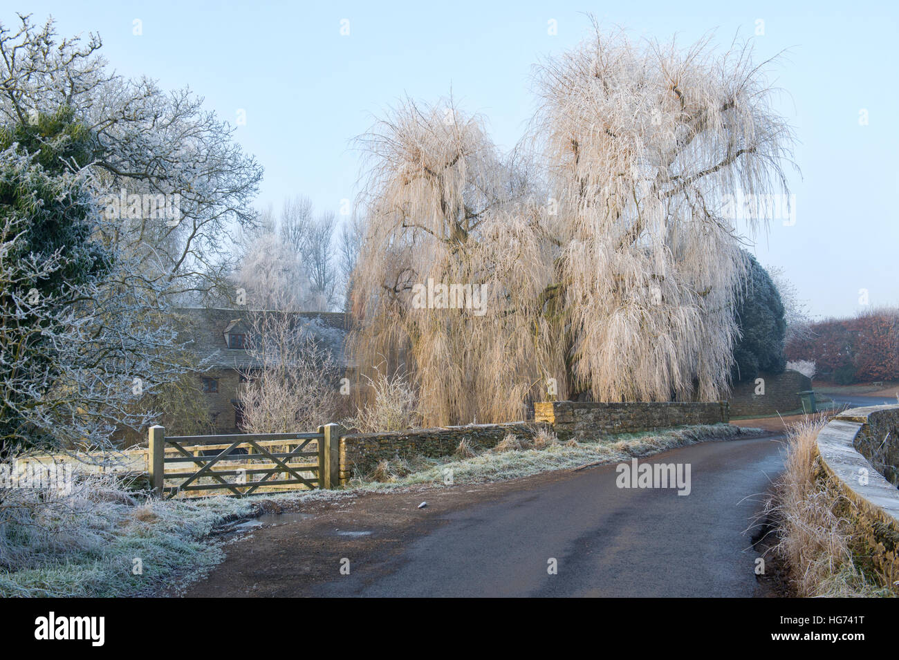 Weeping willow trees and the Mill house covered in a hoar frost in winter. Somerton, North Oxfordshire, England - Stock Image