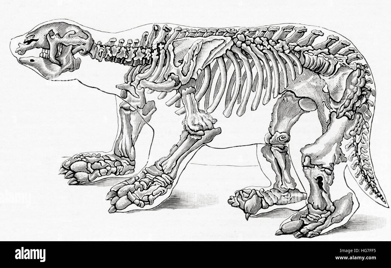 Skeleton of a Megatherium, a genus of elephant-sized ground sloths. From Meyers Lexicon, published 1924. - Stock Image