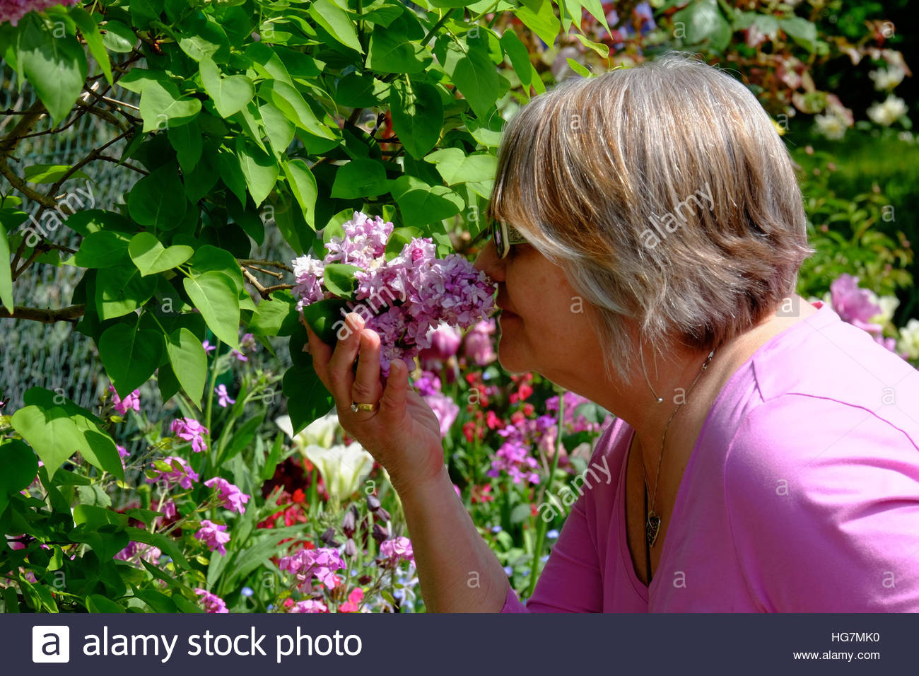 A woman pauses for a moment to smell lilacs in Monet's Garden in Giverny, France. - Stock Image