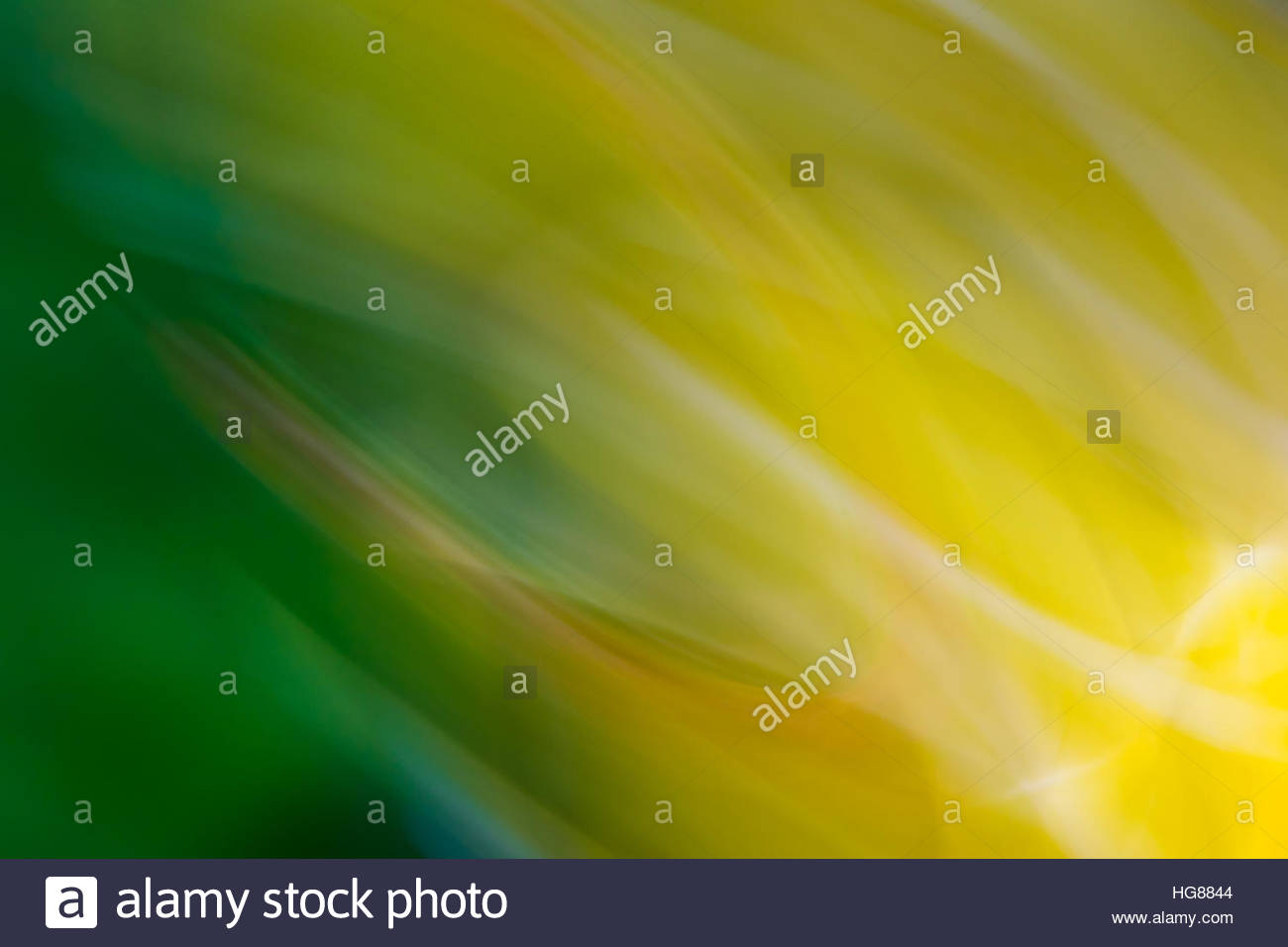 Bright yellows and greens from flowers and nature are abstracted and swirled in an active pattern - Stock Image