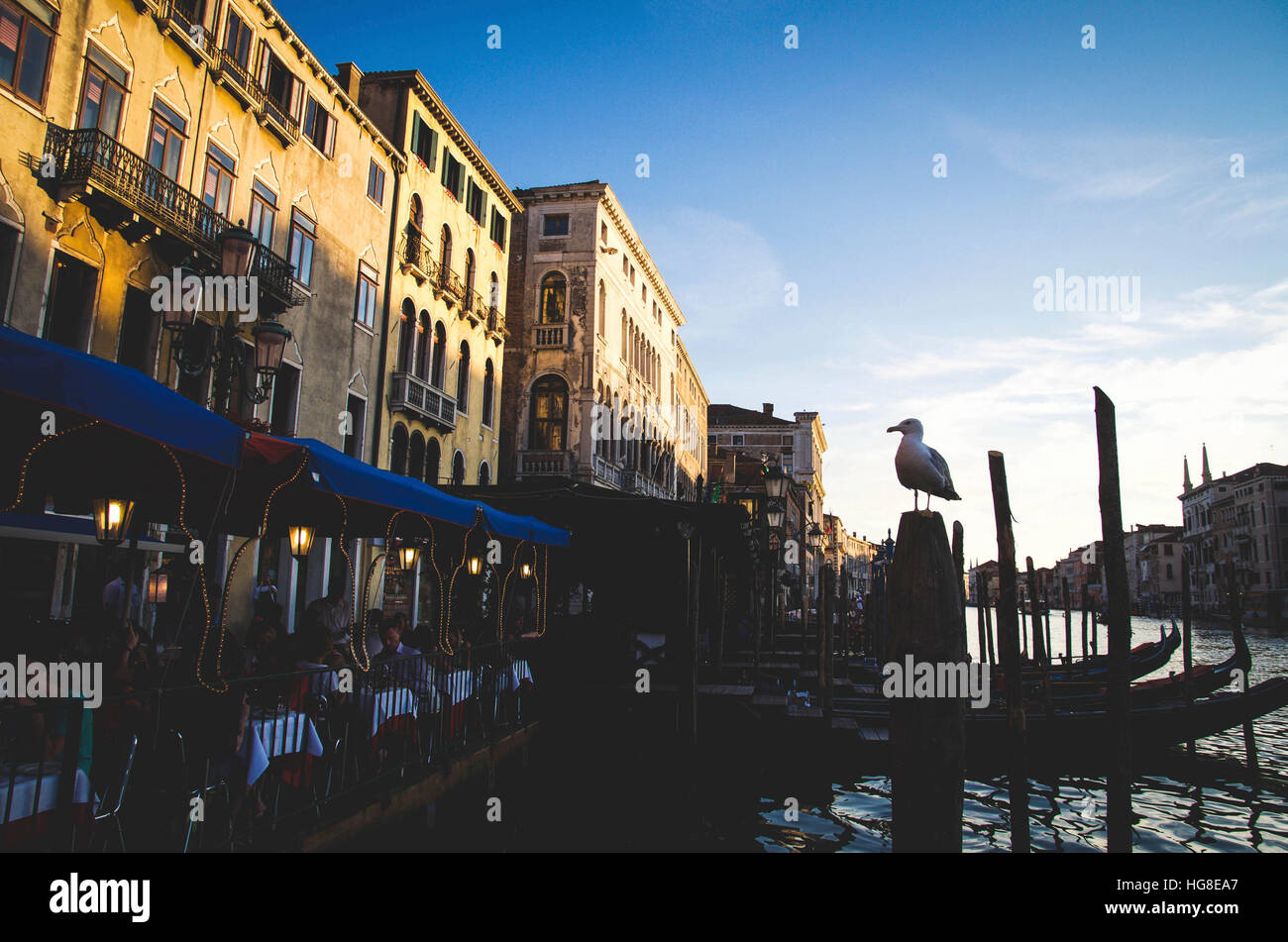 Seagull perching on wooden posts in canal against buildings - Stock Image