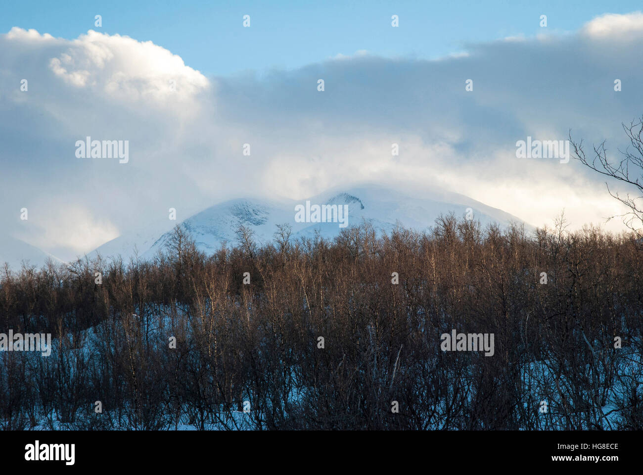 Dried plants on field against cloudy sky during winter - Stock Image