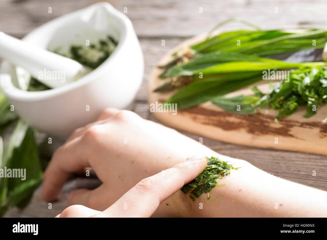 Spitz-Wegerich hilft bei Insektenstich, Mückenstich, Mückenstiche, zerkleinerte Blätter werden auf die juckende Hautstelle gelegt, Auflage, Hausmittel Stock Photo