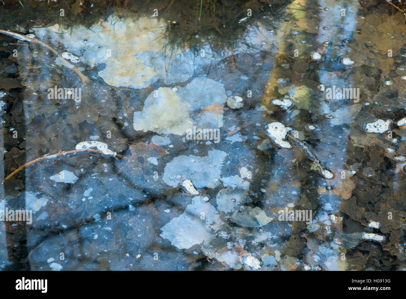 Water pool / pond / slow flowing stream polluted with surface / floating oil or grease. Oxshott Common, near Esher, - Stock Image