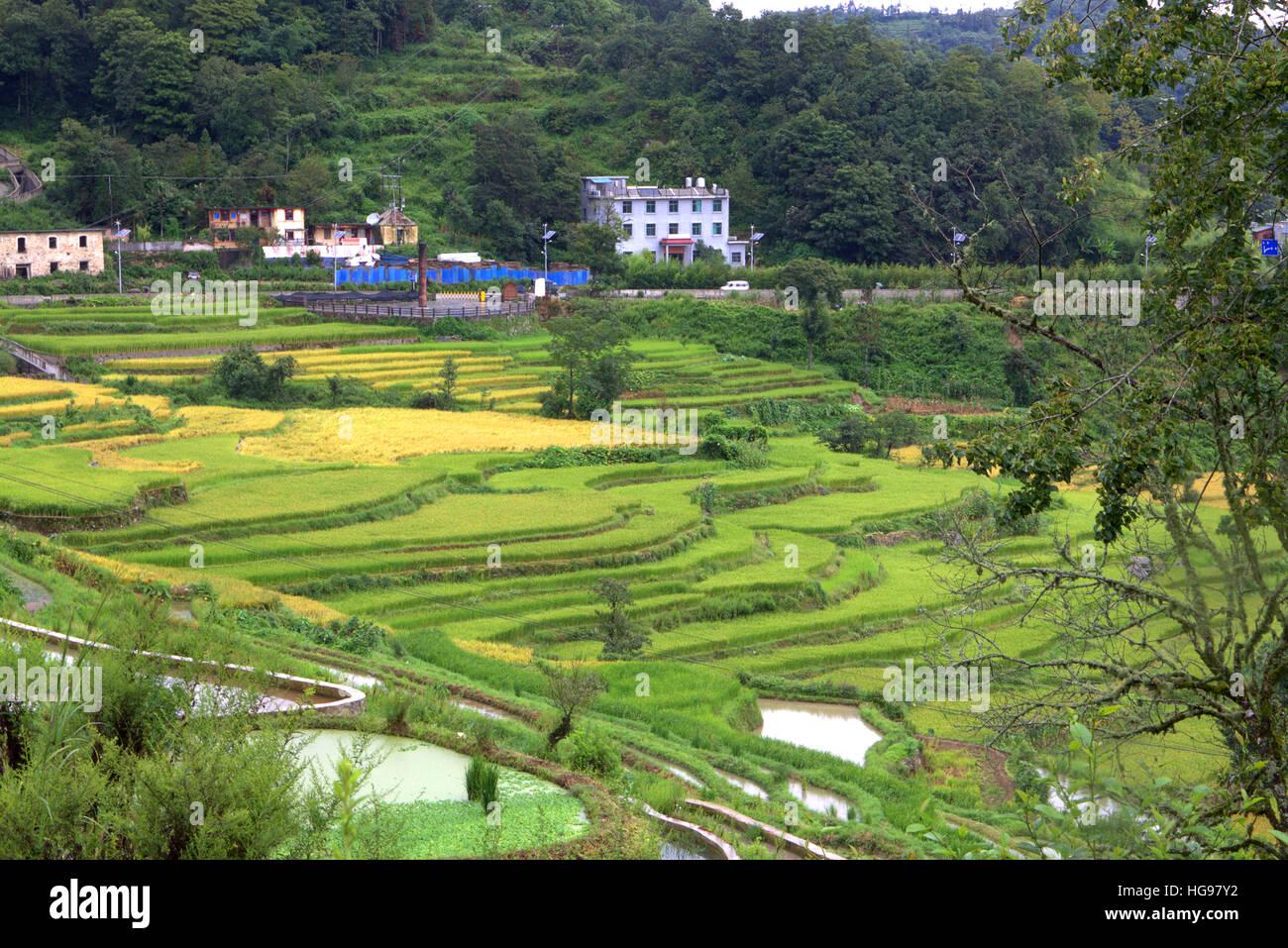 Yuanyang Hani Rice Terraces, Yunnan, China, summer - Stock Image