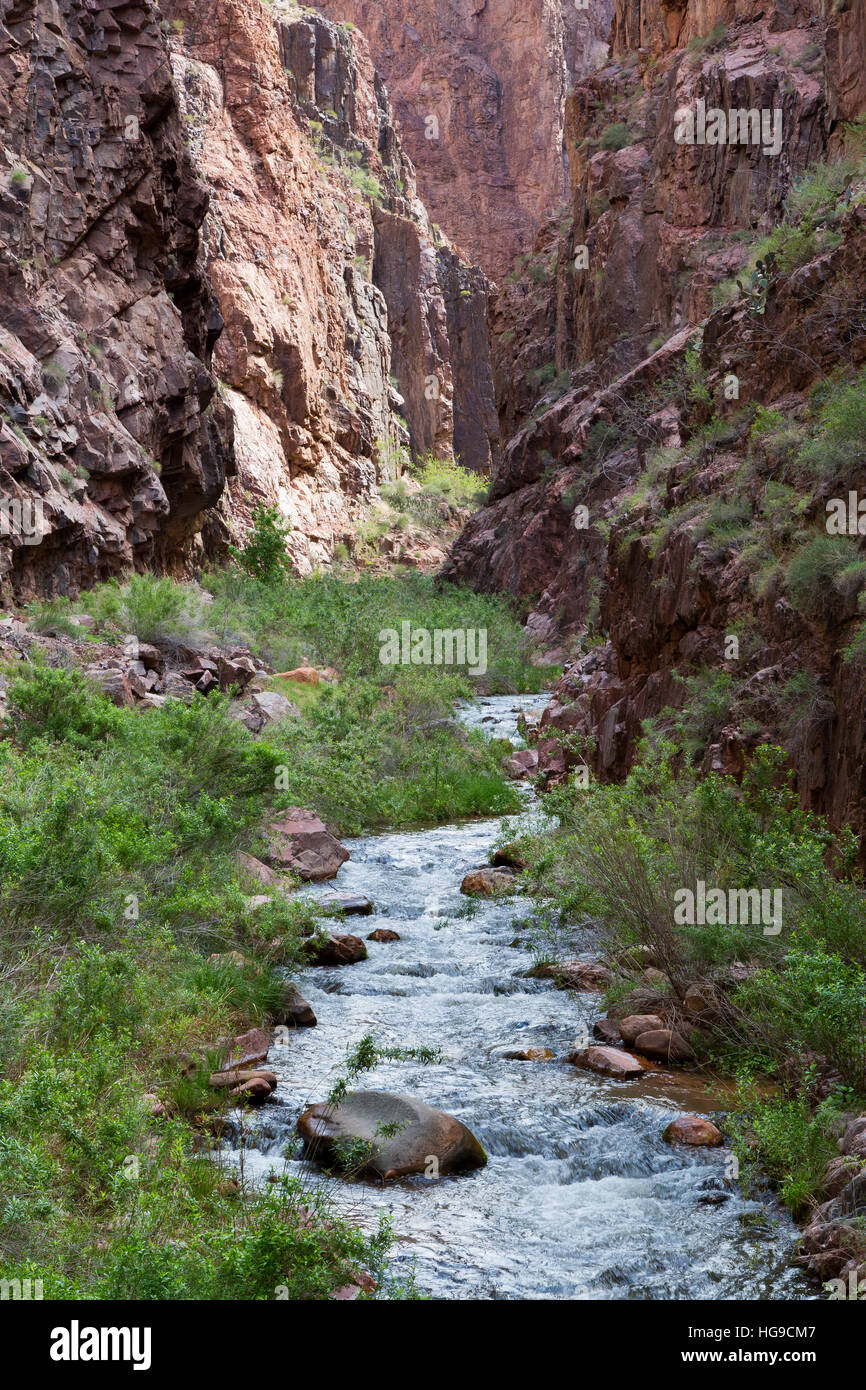 Bright Angel Creek flowing through the Vishnu Basement Rocks along the North Kaibab Trail. Grand Canyon National - Stock Image