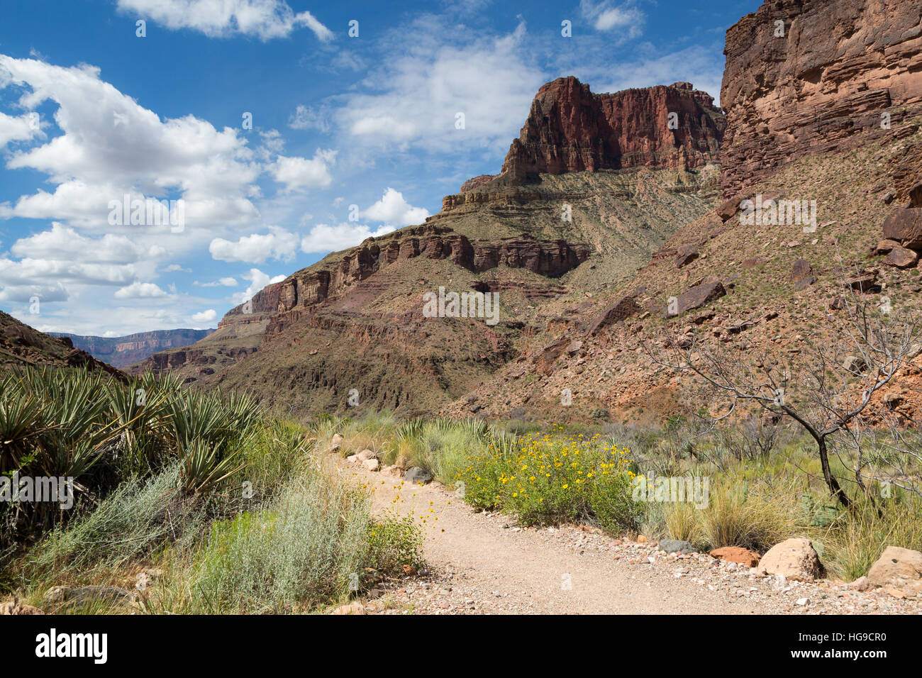 Yucca plants and wildflowers growing along the North Kaibab Trail in the Grand Canyon. Grand Canyon National Park, - Stock Image
