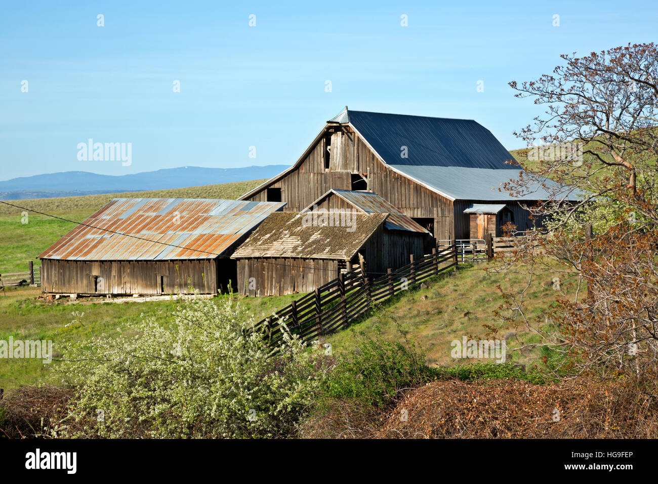 WA13114-00...WASHINGTON - Old barn and outbuildings at the Dalles Mountain Ranch in Columbia Hills State Park. - Stock Image