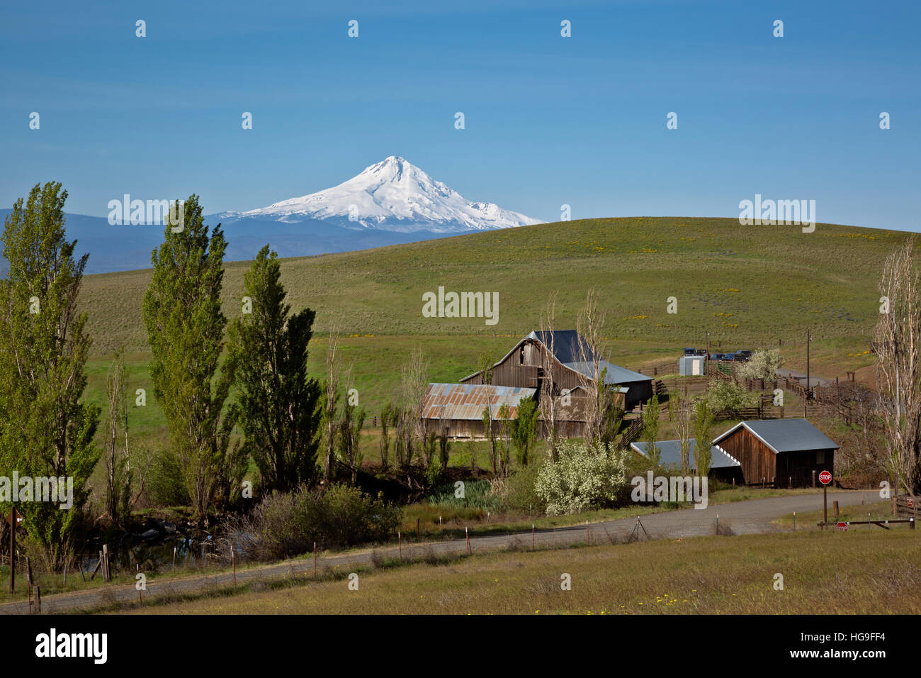 WASHINGTON - Mount Hood rising above the rolling hills of the historic Dalles Mountain Ranch in Columbia Hills State - Stock Image