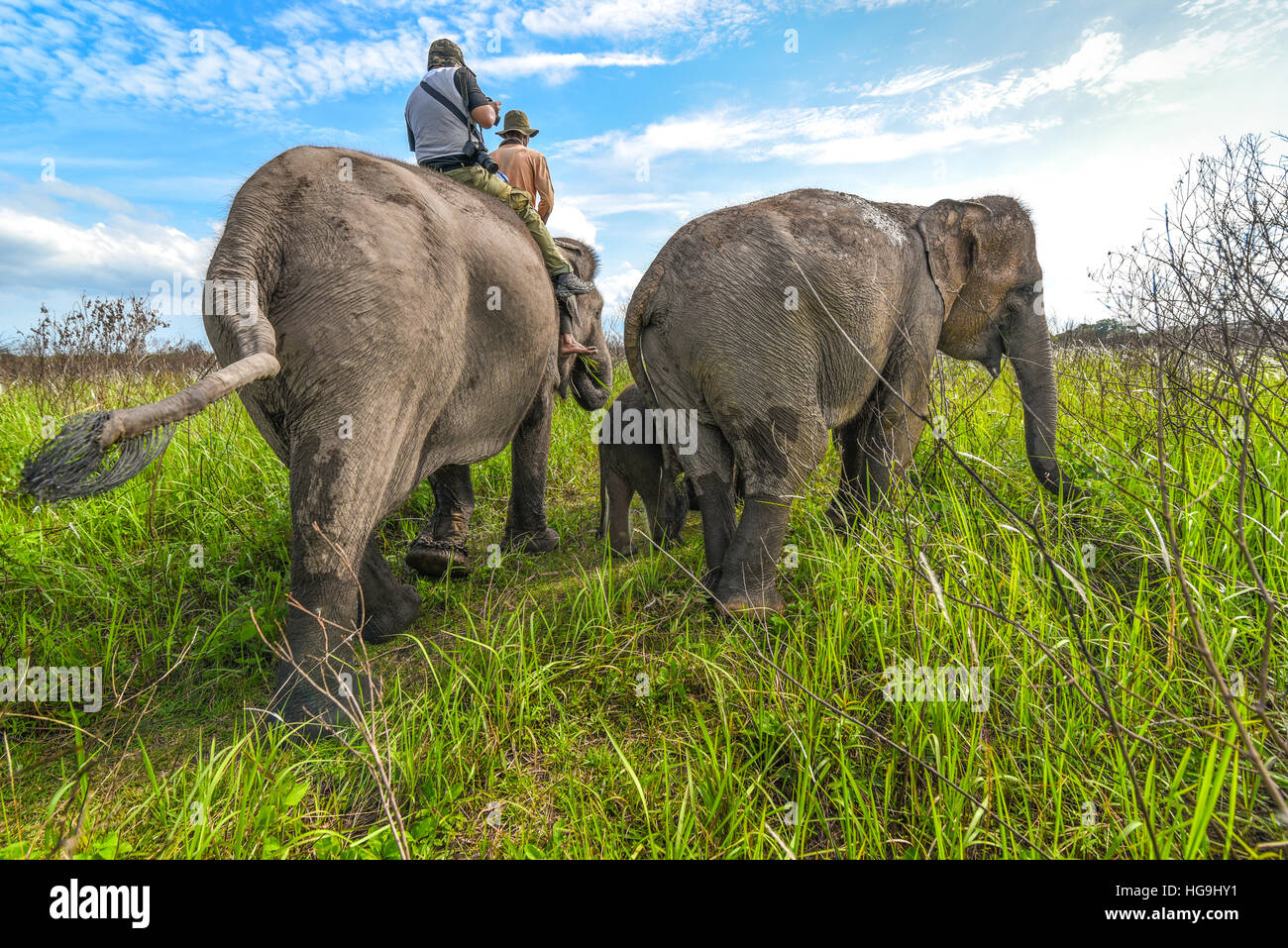 Elephant riding in Way Kambas National Park, Lampung, Sumatra, Indonesia. © Reynold Sumayku - Stock Image