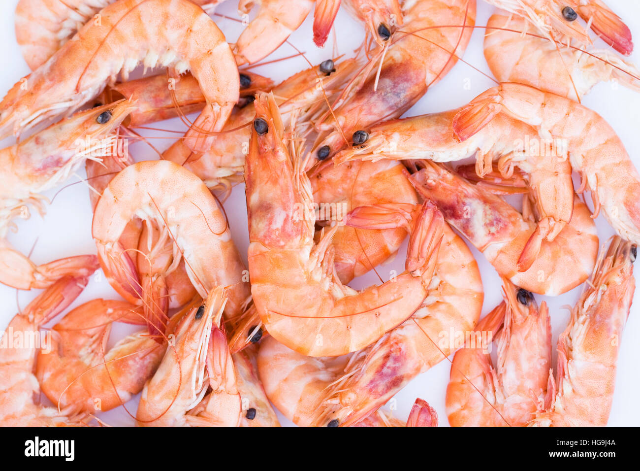 Crevettes on a white background. - Stock Image
