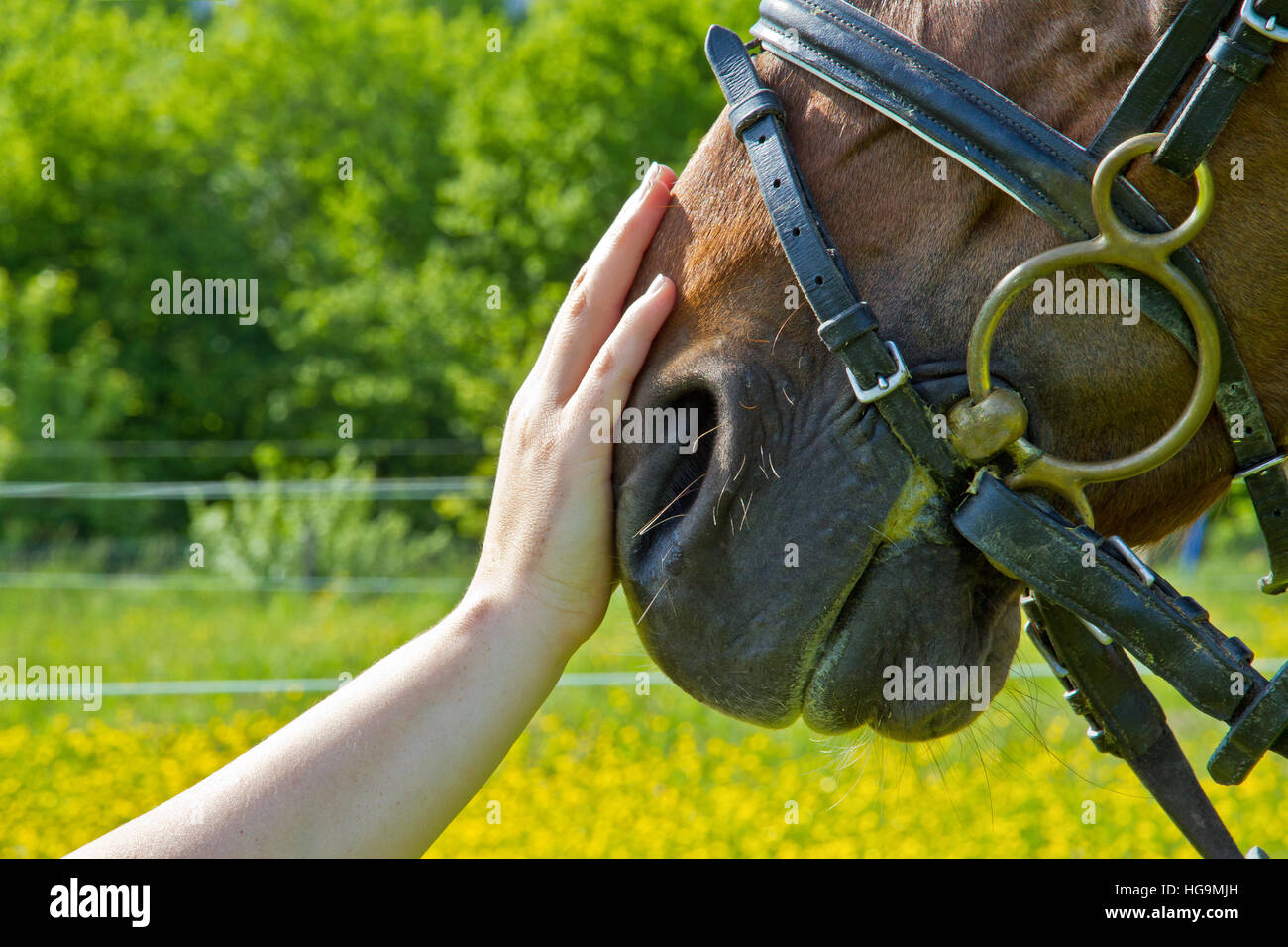 Hand of a woman makes a friendly gesture to a horse by stoking it's head Stock Photo