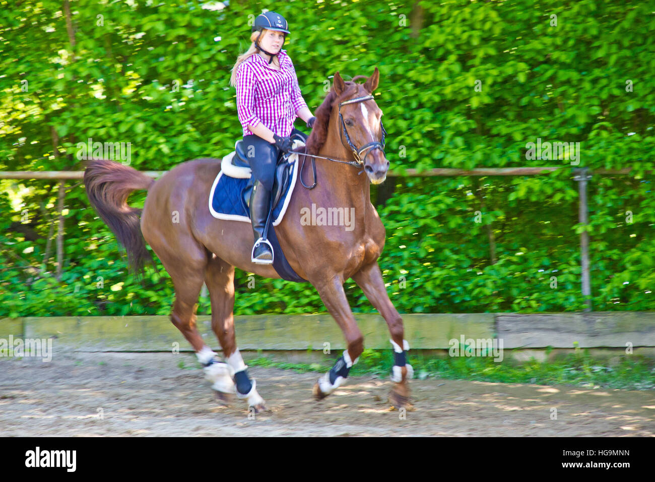 Young woman training with horse on sand place Stock Photo