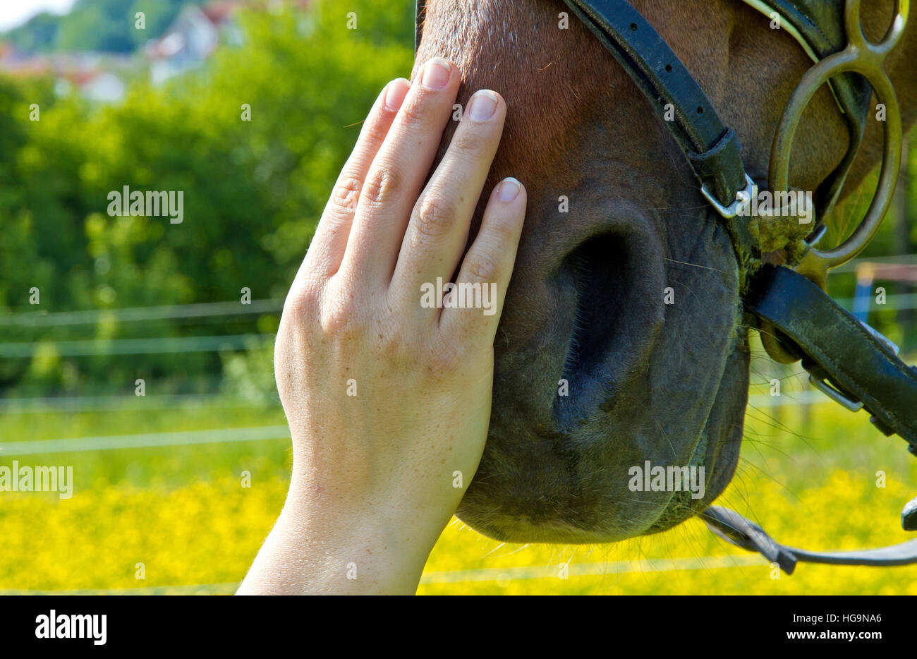 Hand of a woman makes a friendly gesture to a horse by stoking it's head - Stock Image
