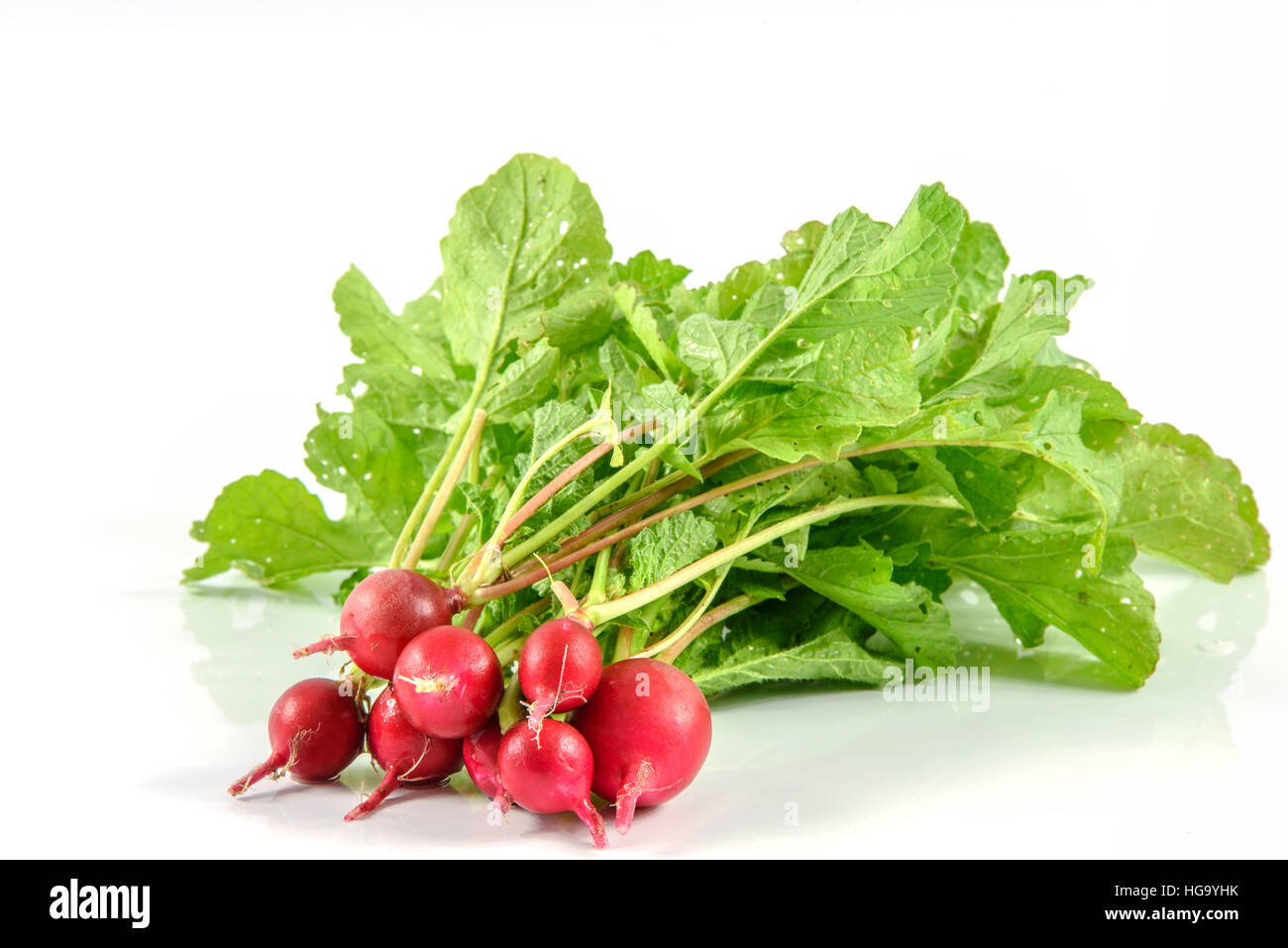 Fresh bunch of radishes from organic production without fertilizers - Stock Image