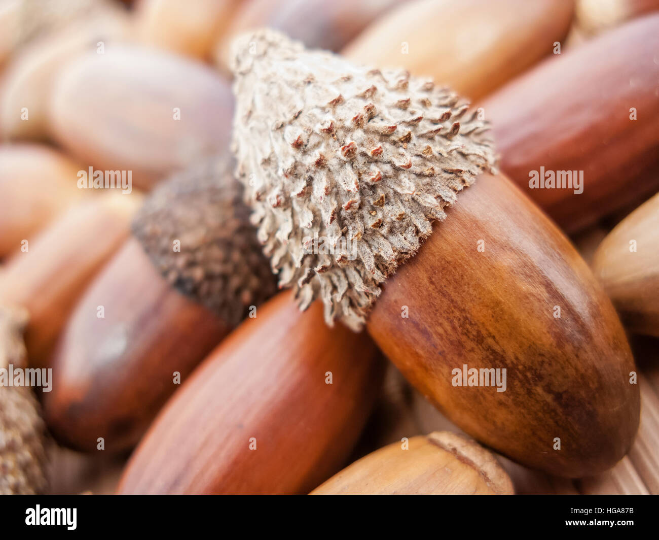 Pile Of Acorns Stock Photos Pile Of Acorns Stock Images